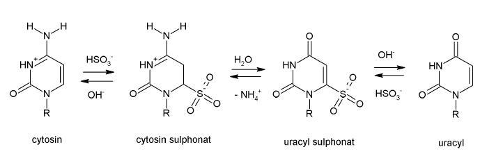 Chemický průběh modifikace cytosinu na uracil