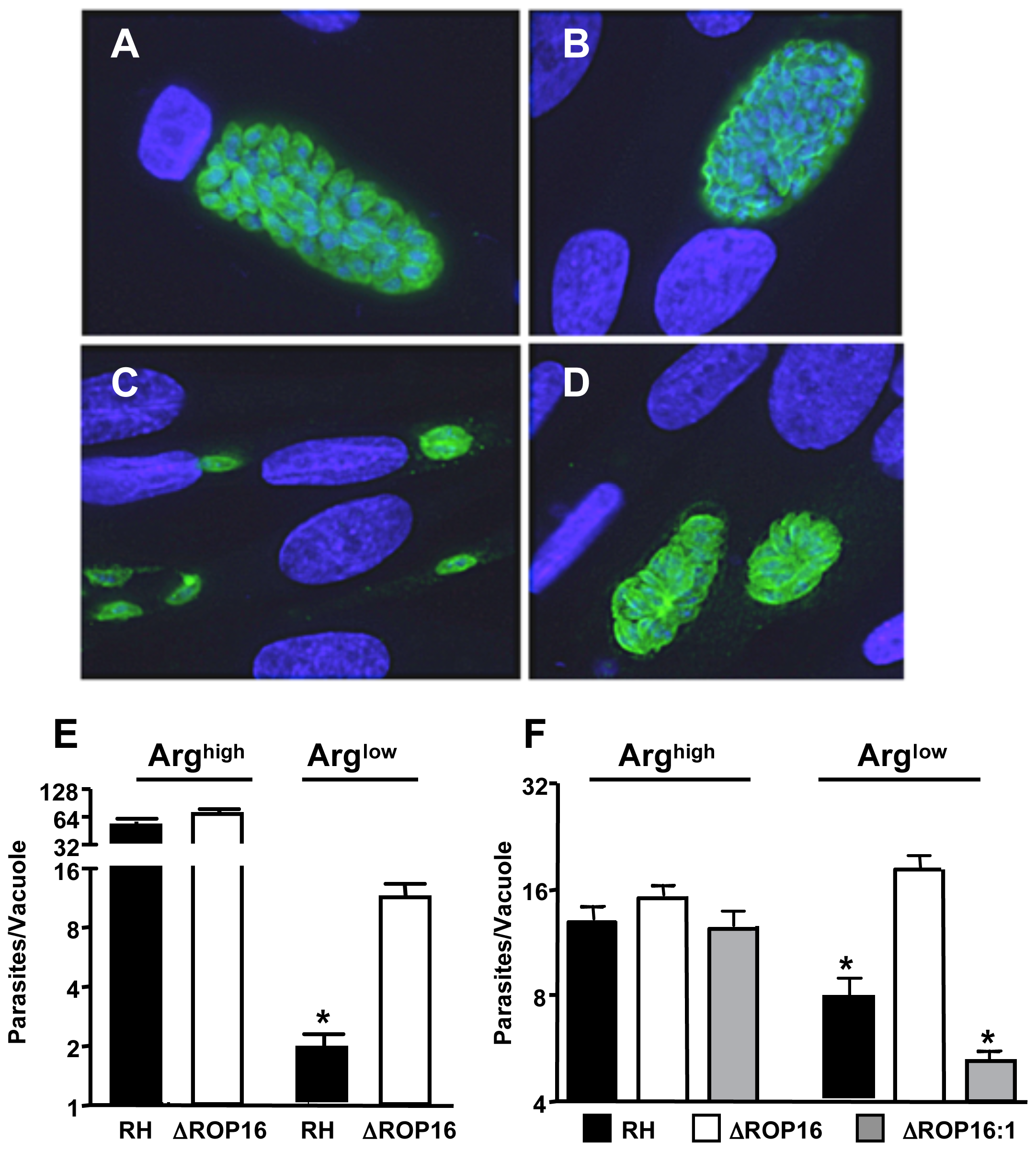 ΔROP16 parasites are resistant to arginine deficient conditions.