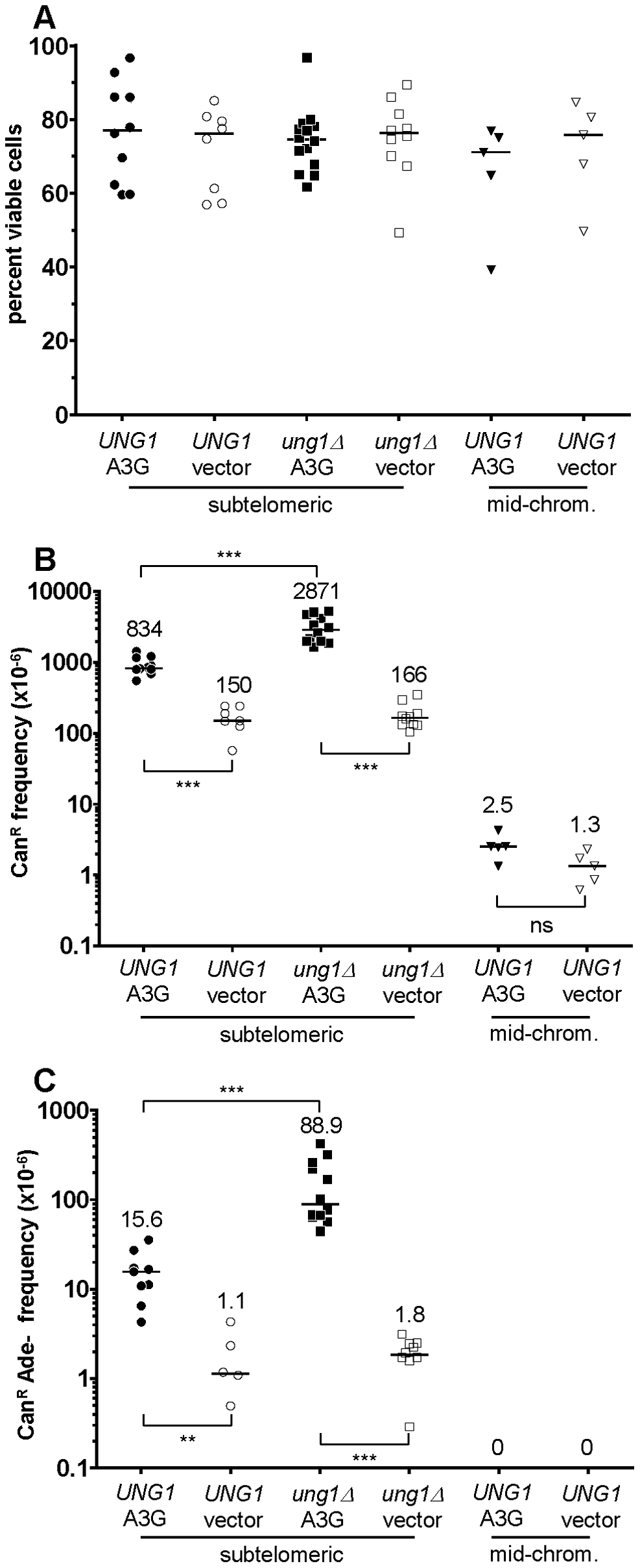 The activity of human APOBEC3G on the ssDNA mutagenesis reporter system.