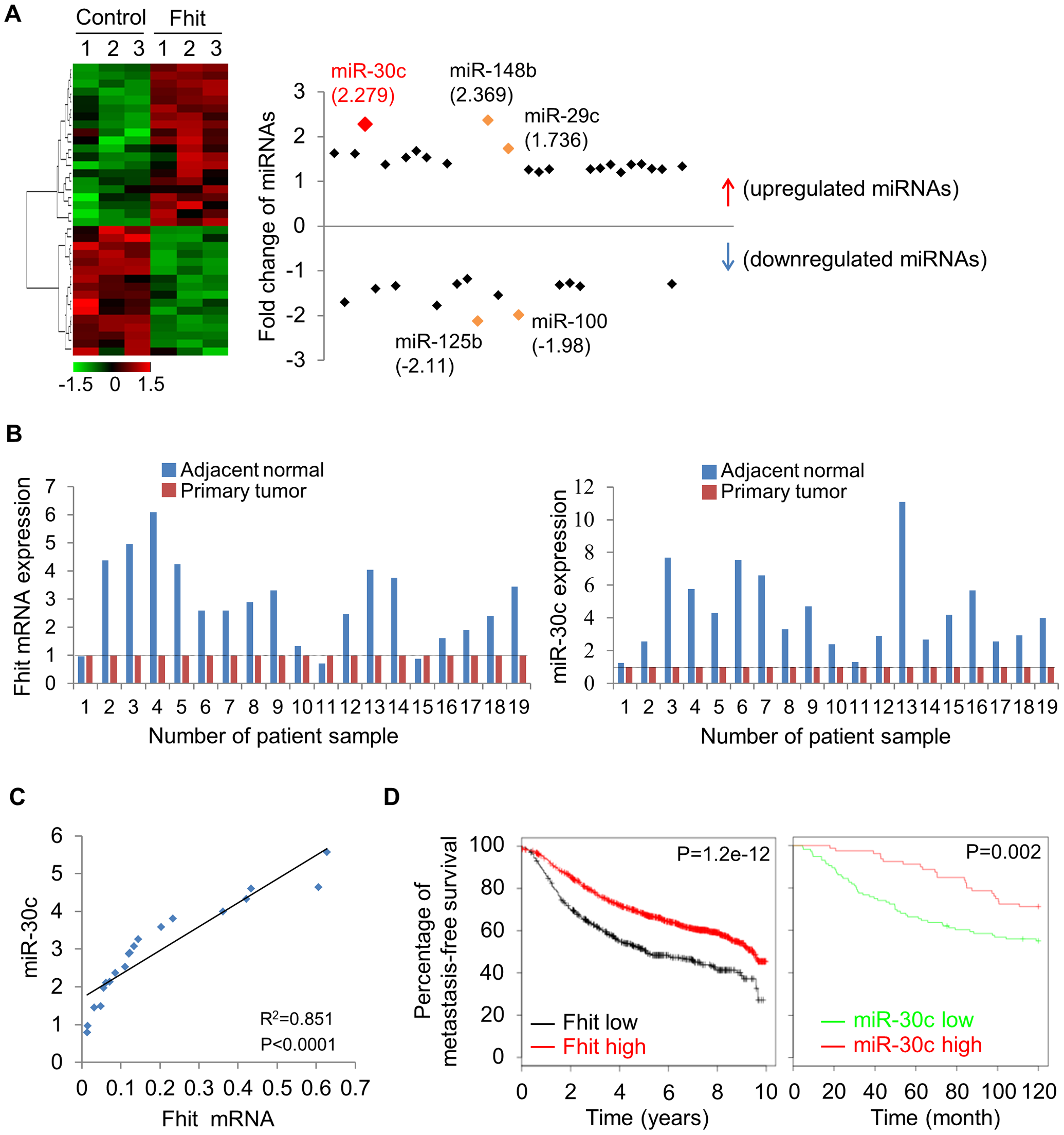 FHIT expression leads to activation of miR-30c in lung cancer.