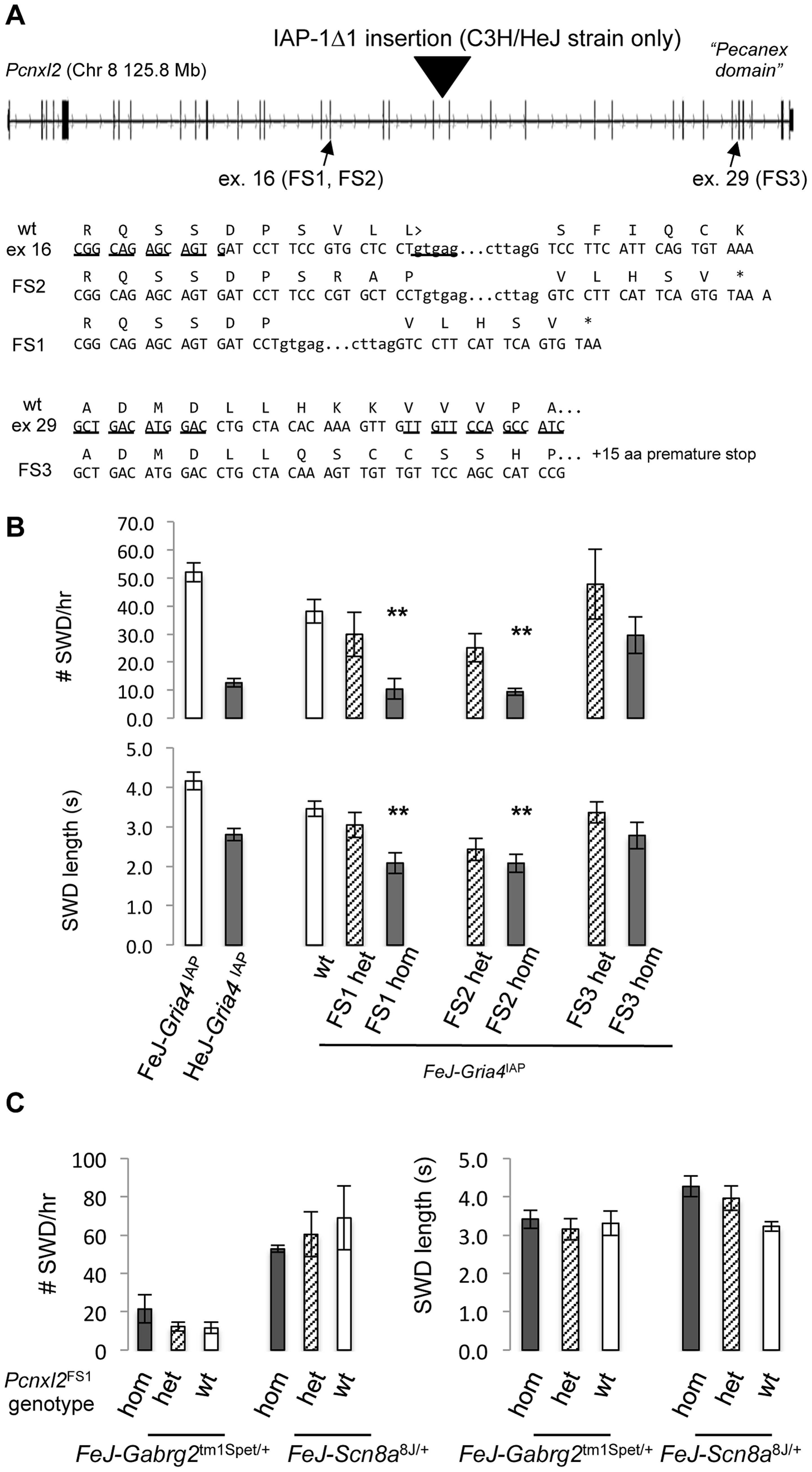 TALEN-induced frameshift alleles of <i>Pcnxl2</i> and suppression of <i>Gria4</i> SWD.