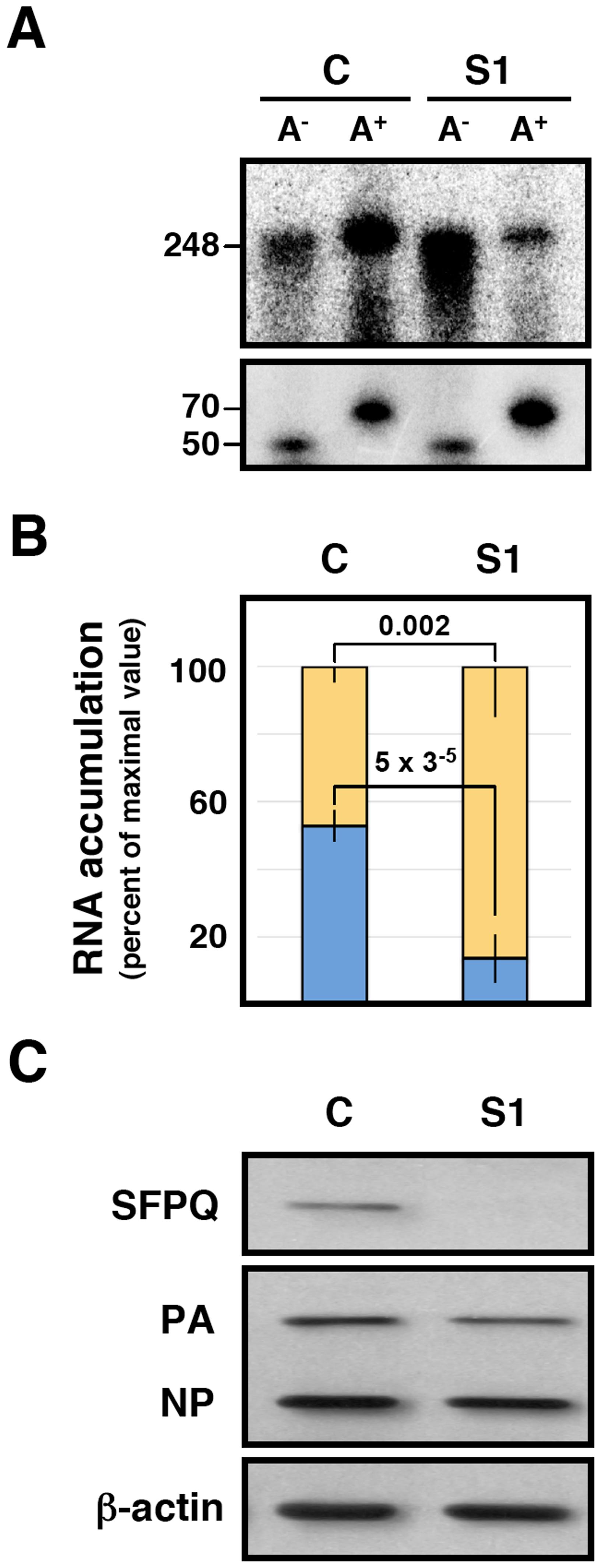 Dependence of SFPQ/PSF for the <i>in vitro</i> polyadenylation of transcripts.