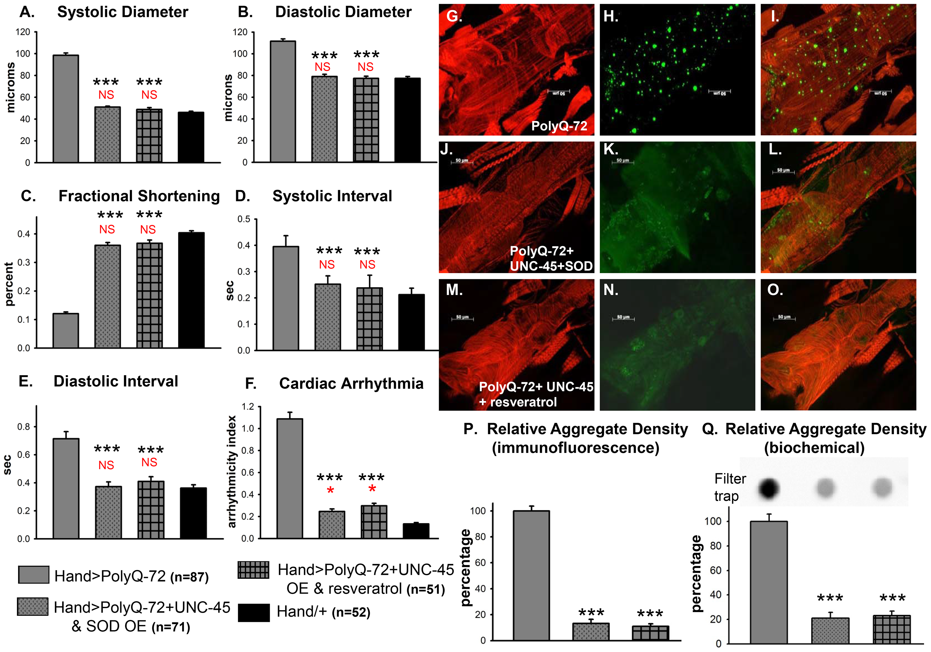 Combined over-expression of UNC-45 and SOD-1 or over-expression of UNC-45 and treatment with antioxidant resveratrol are required for nearly complete suppression of PolyQ-induced cardiac defects and aggregation.