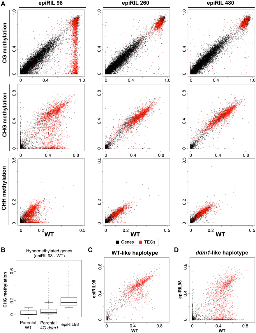 Effects of disrupted heterochromatin in the <i>DDM1</i> wild type background examined at single base resolution.