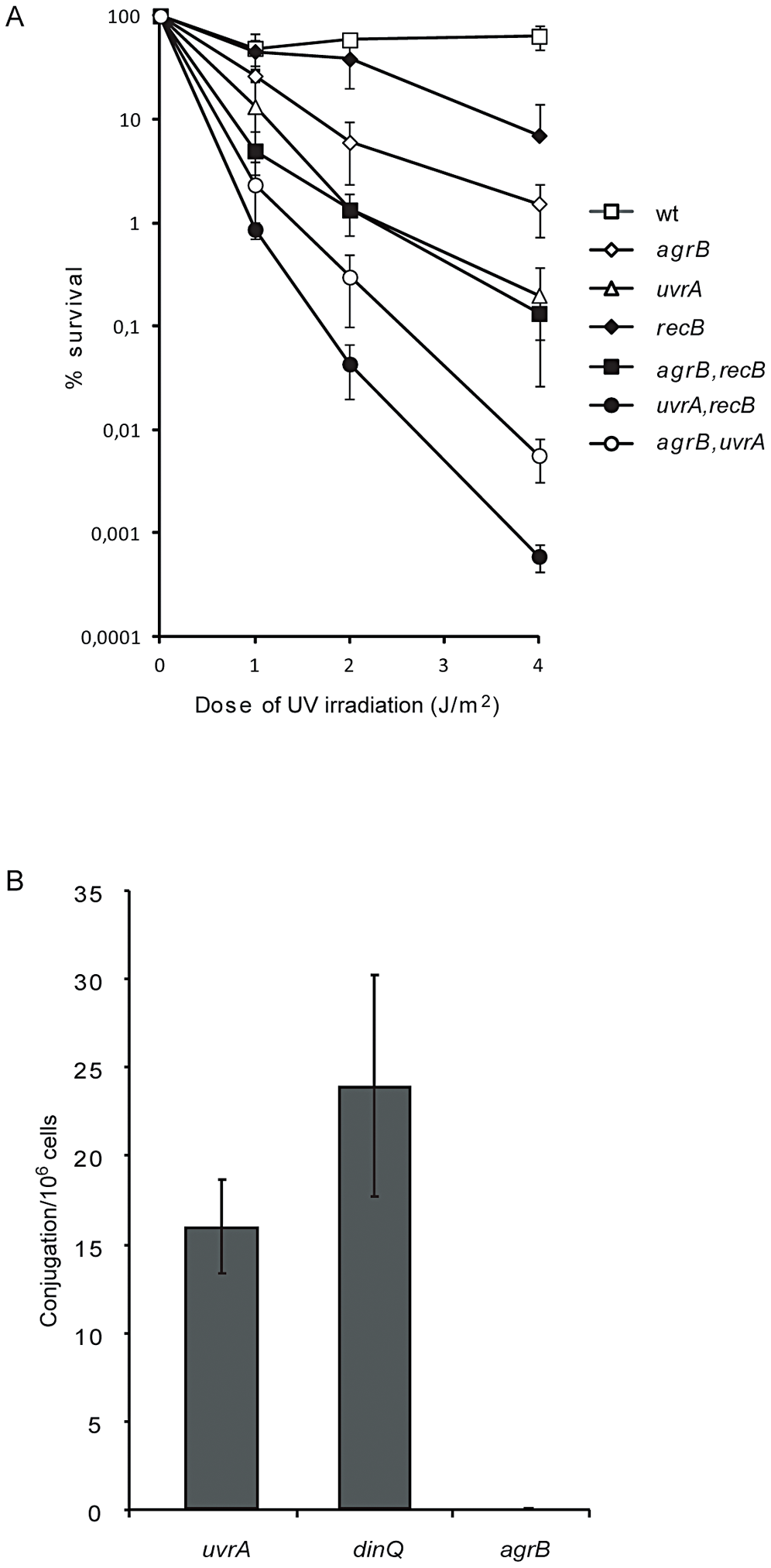 Genetic interactions between <i>agrB</i> and <i>uvrA</i>/<i>recB</i> and recombination frequency of <i>agrB</i>.