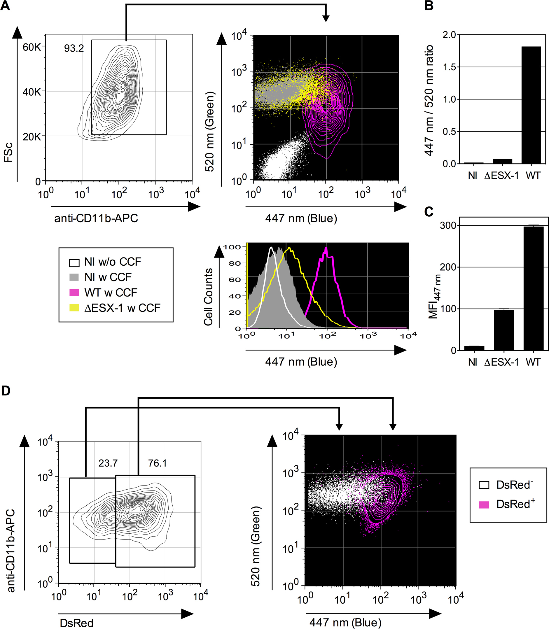 Detection of <i>Mtb</i>-mediated phagosome disruption by flow cytometry.