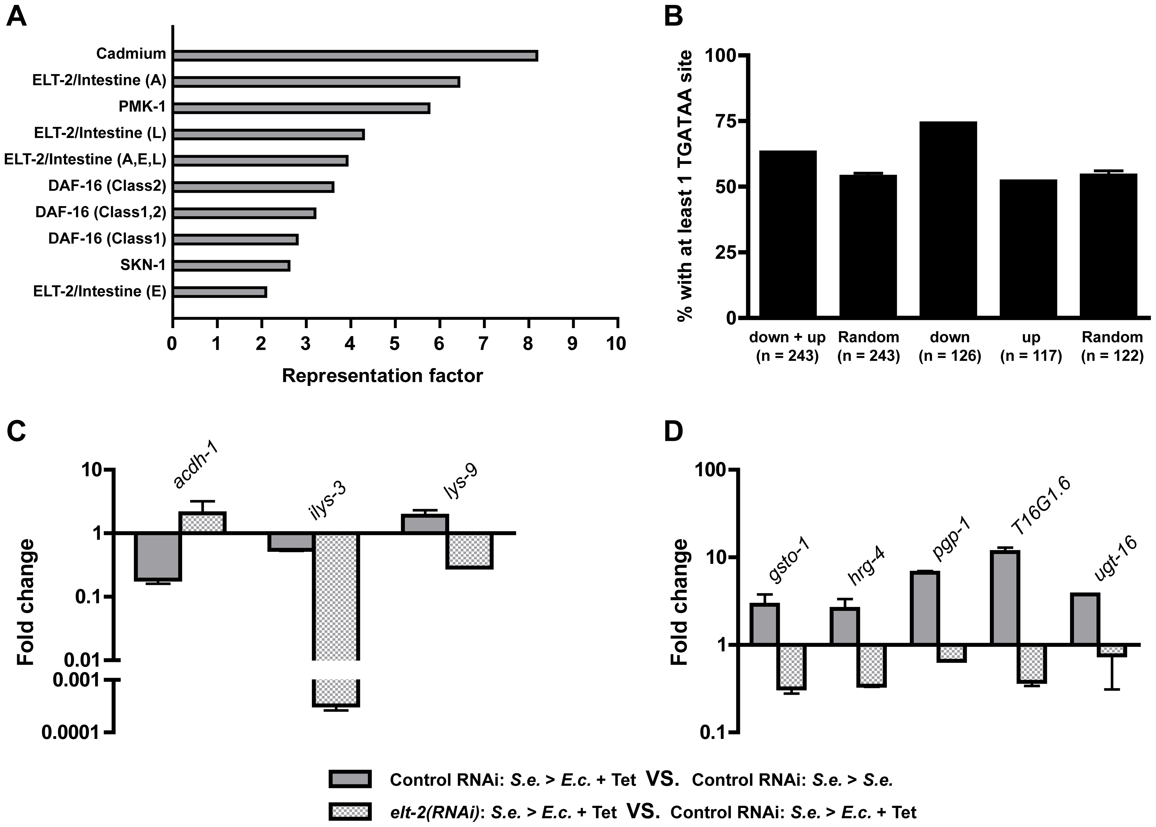 ELT-2 regulates the expression of specific genes during recovery.