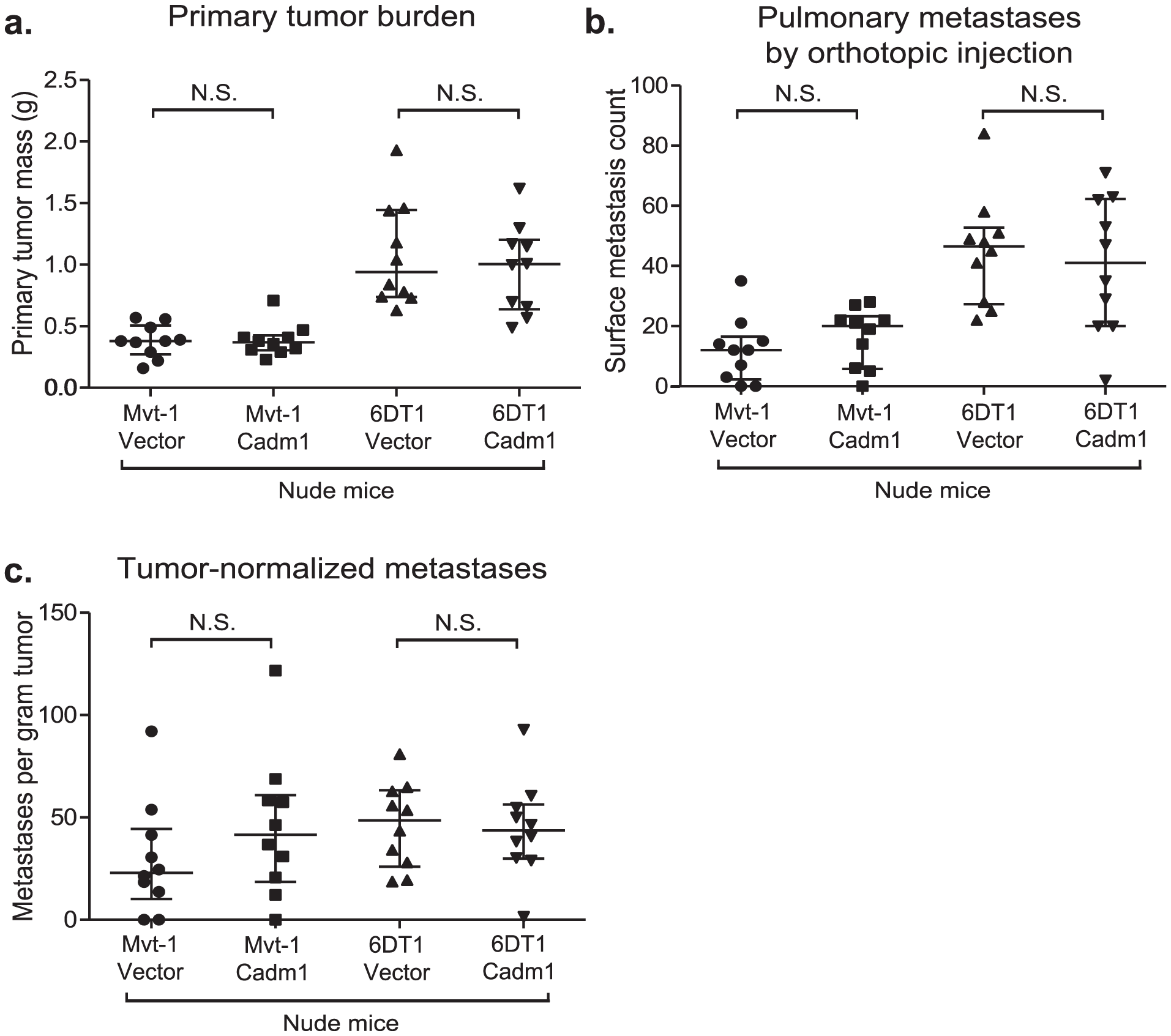 The effect of <i>Cadm1</i> expression on tumor and metastasis in athymic mice.