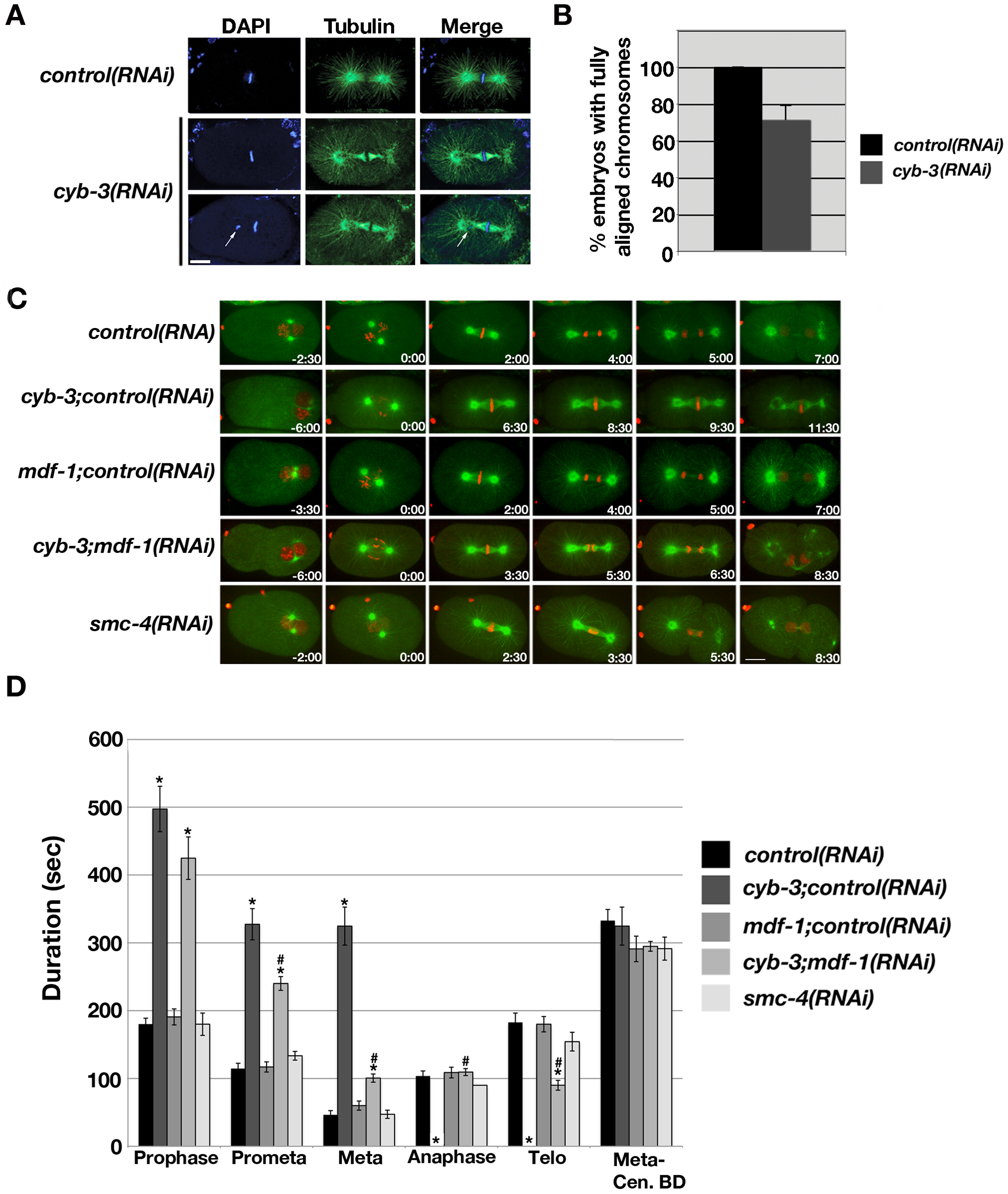 <i>cyb-3(RNAi)</i> results in chromosome congression defects and a prolonged SAC–dependent metaphase delay.