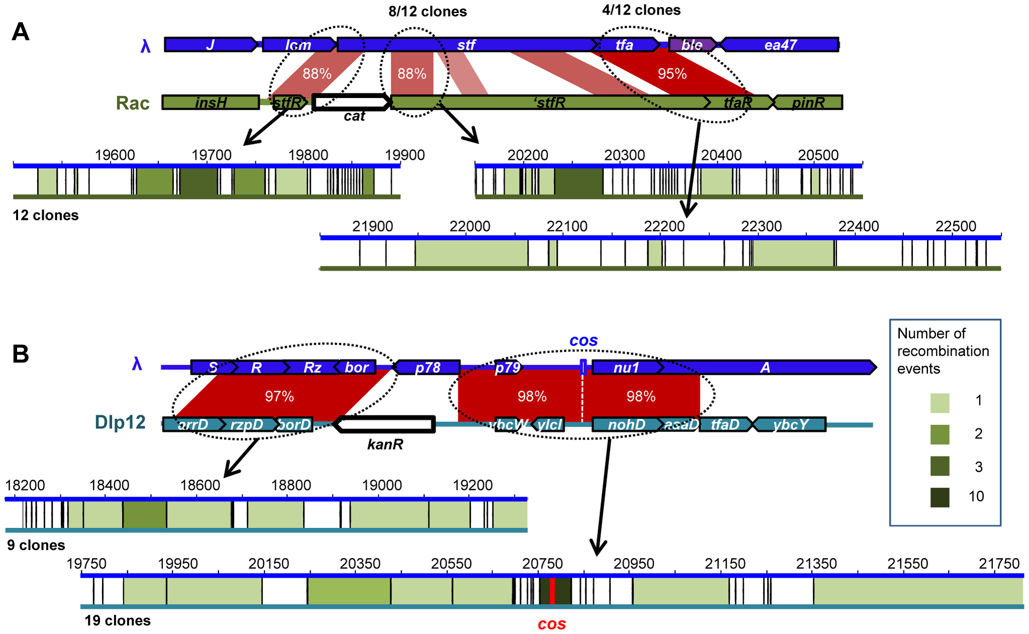 Position of recombination events in homology regions between λ and defective prophages.