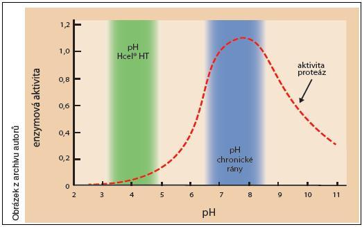 Vliv pH na aktivitu proteáz přítomných v chronické ráně (rozsah hodnot pH Hcel HT byl zjištěn při zkoumání in vitro na modelu rány)