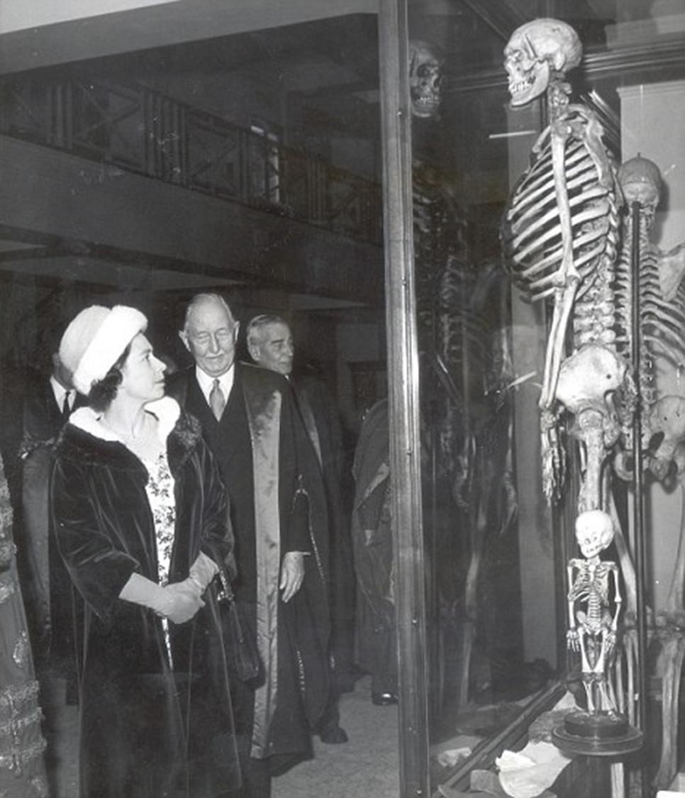 """Královna Alžběta II. v roce 1962 před kostrou """"irského obra"""" Charlese Byrnea v Hunterově muzeu v londýnském sídle Royal College of Surgeons. Svůj dojem komentovala s královskou pokorou slovy """"One feels very small...""""."""
