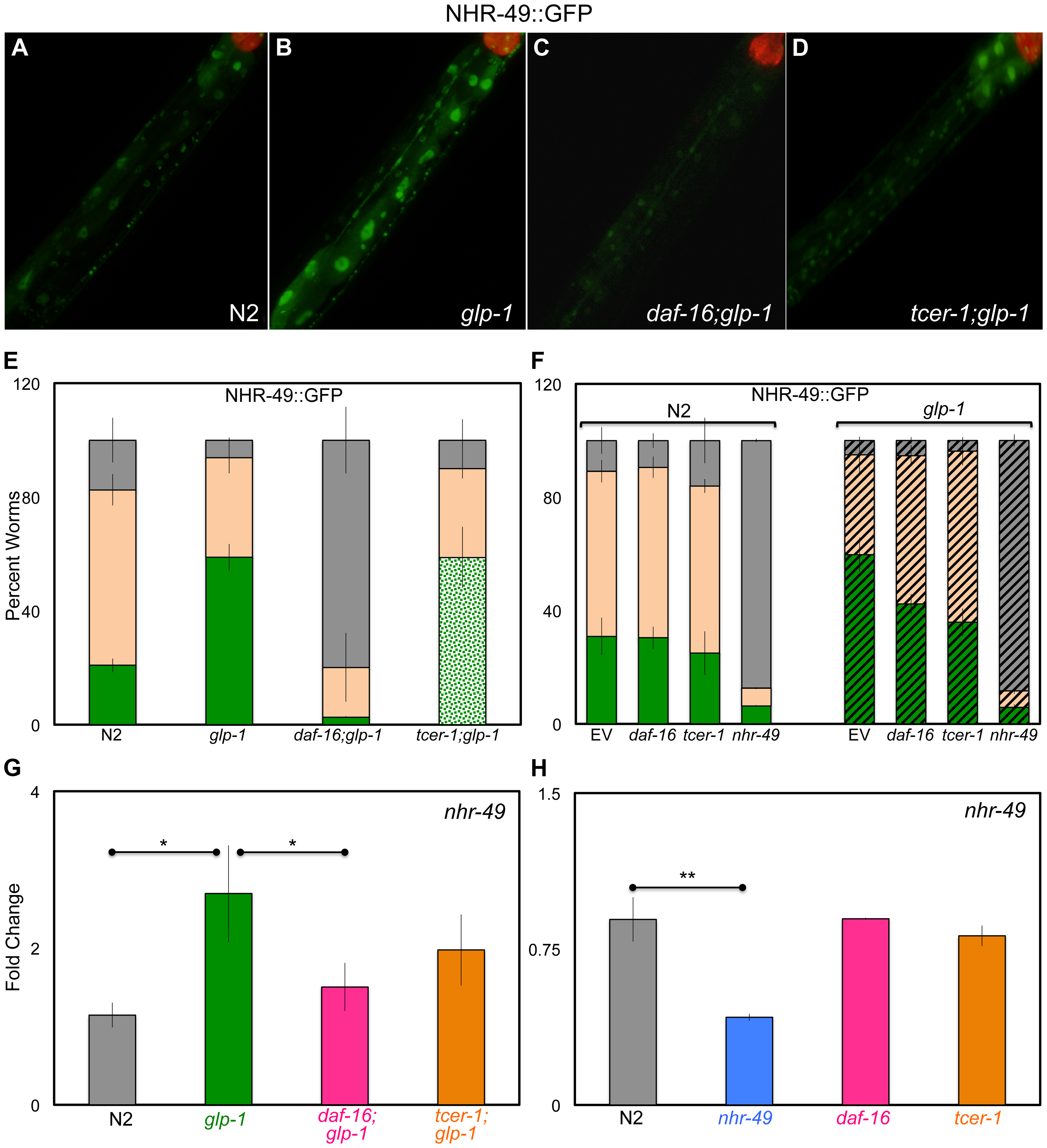 Germline removal causes increased expression of NHR-49 under regulation of DAF-16 and TCER-1.
