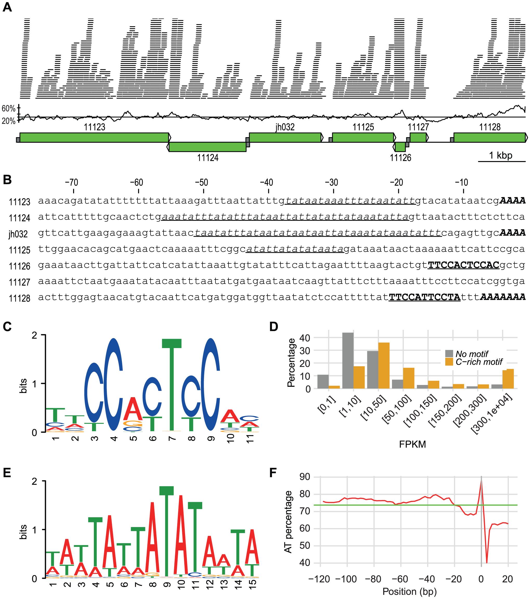 A 10 kbp genomic region with promoter info.