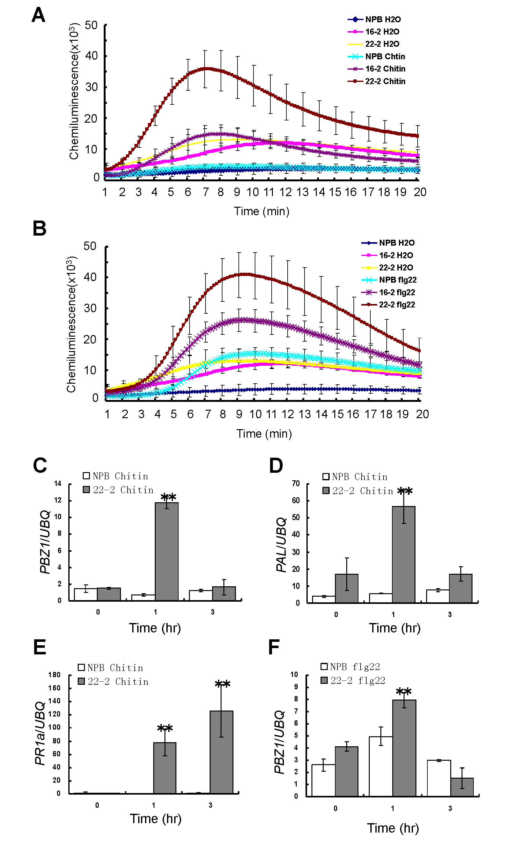 ROS generation and defense-related gene expression of the <i>Spin6</i> RNAi lines after chitin and flg22 treatments.