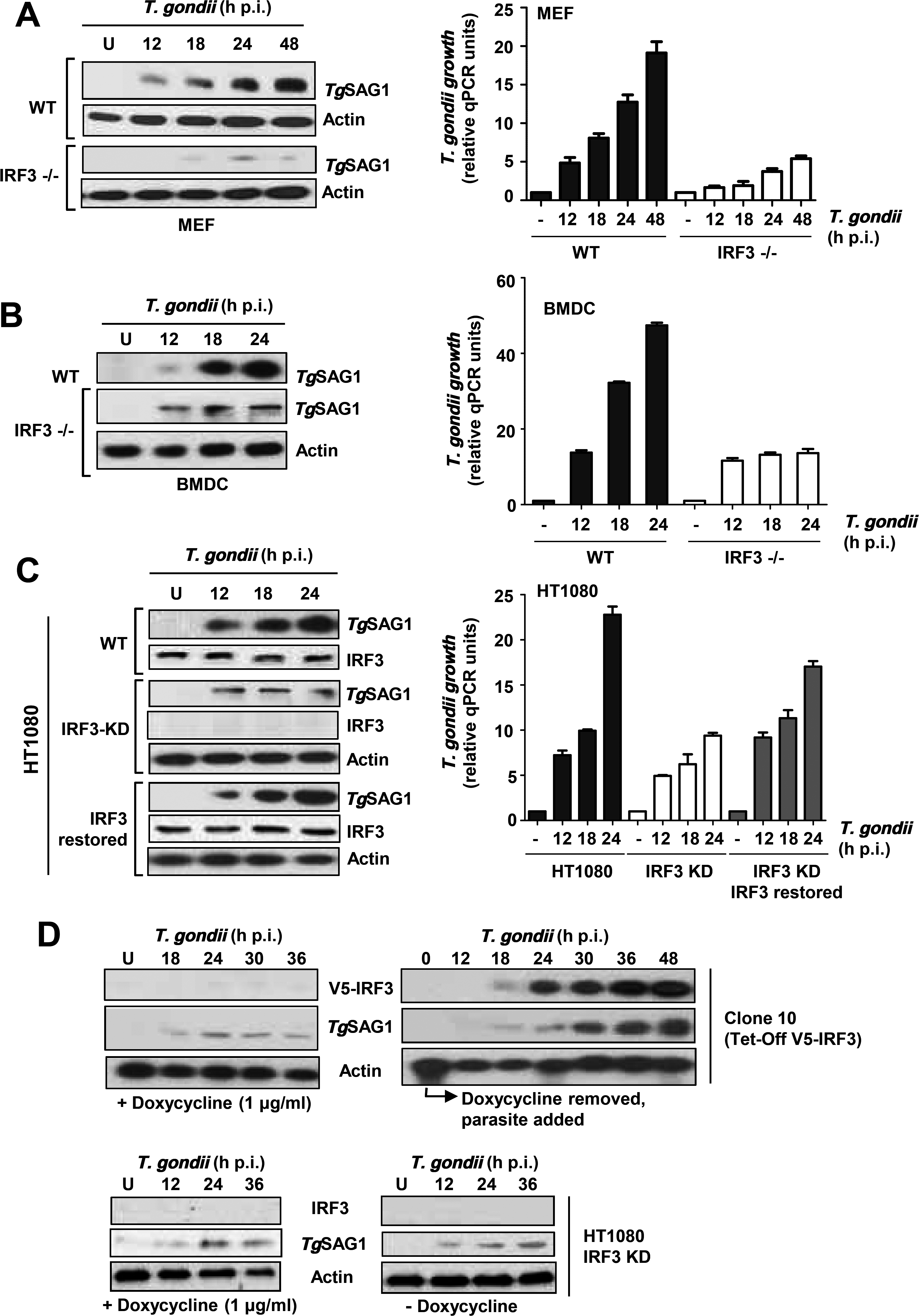 <i>T</i>. <i>gondii</i> replication is stimulated by IRF3.