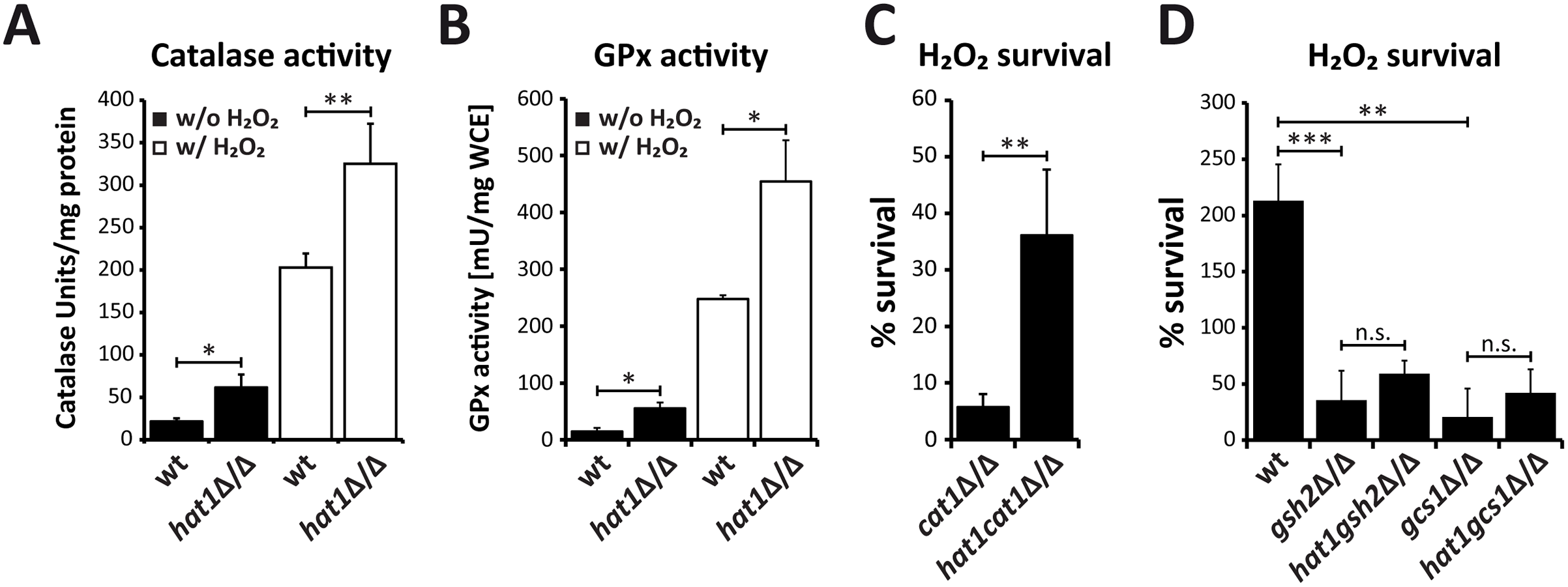 Loss of Hat1 raises antioxidant enzyme activity and glutathione-mediated H<sub>2</sub>O<sub>2</sub> resistance.