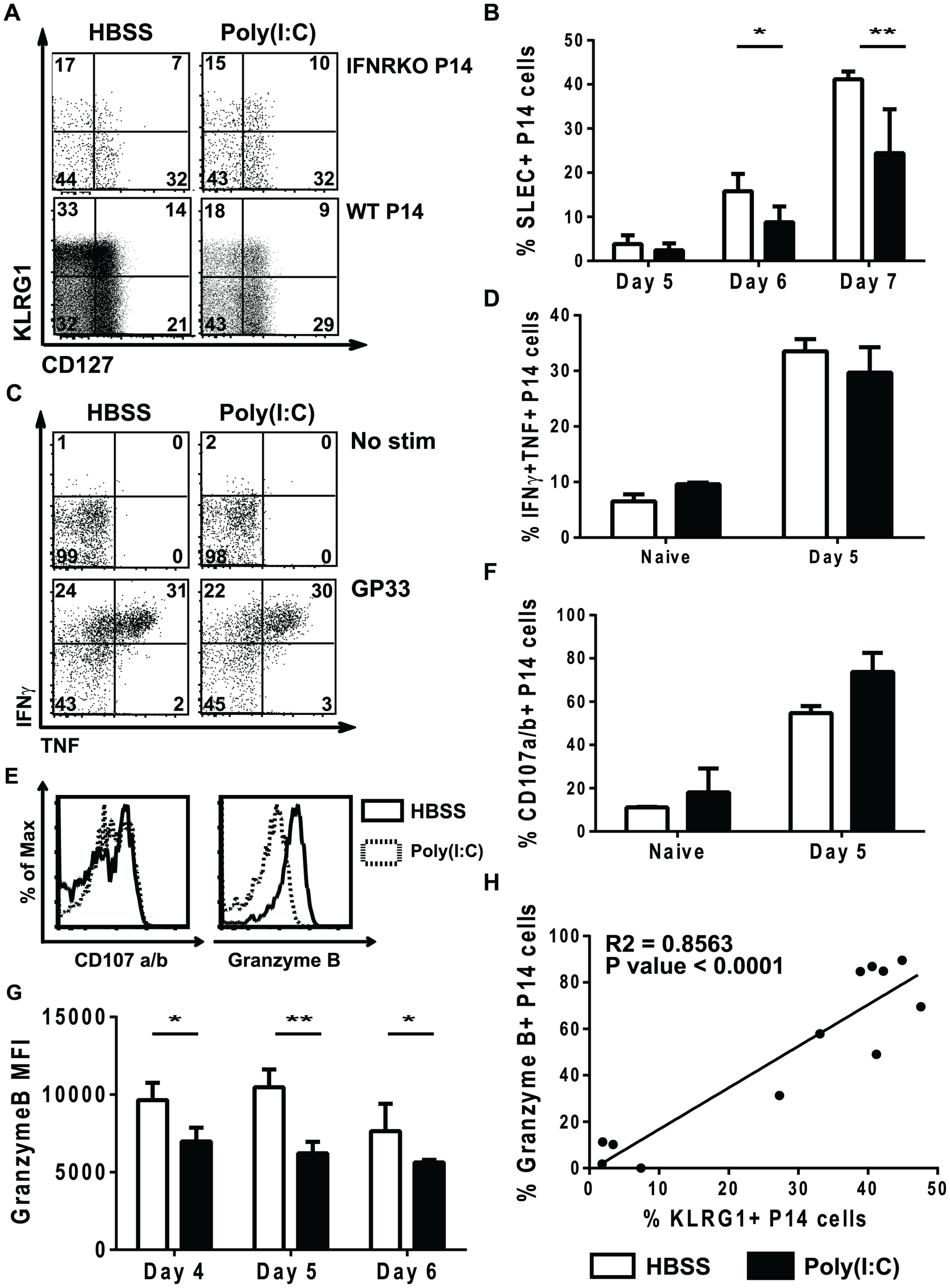 Poly(I∶C)-pretreated P14 CD8 T cells have reduced effector function.