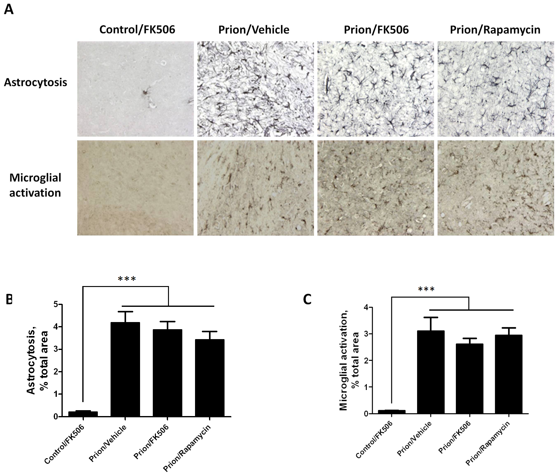 Treatment with FK506 does not alter the extent of astrocytosis or microglial activation.