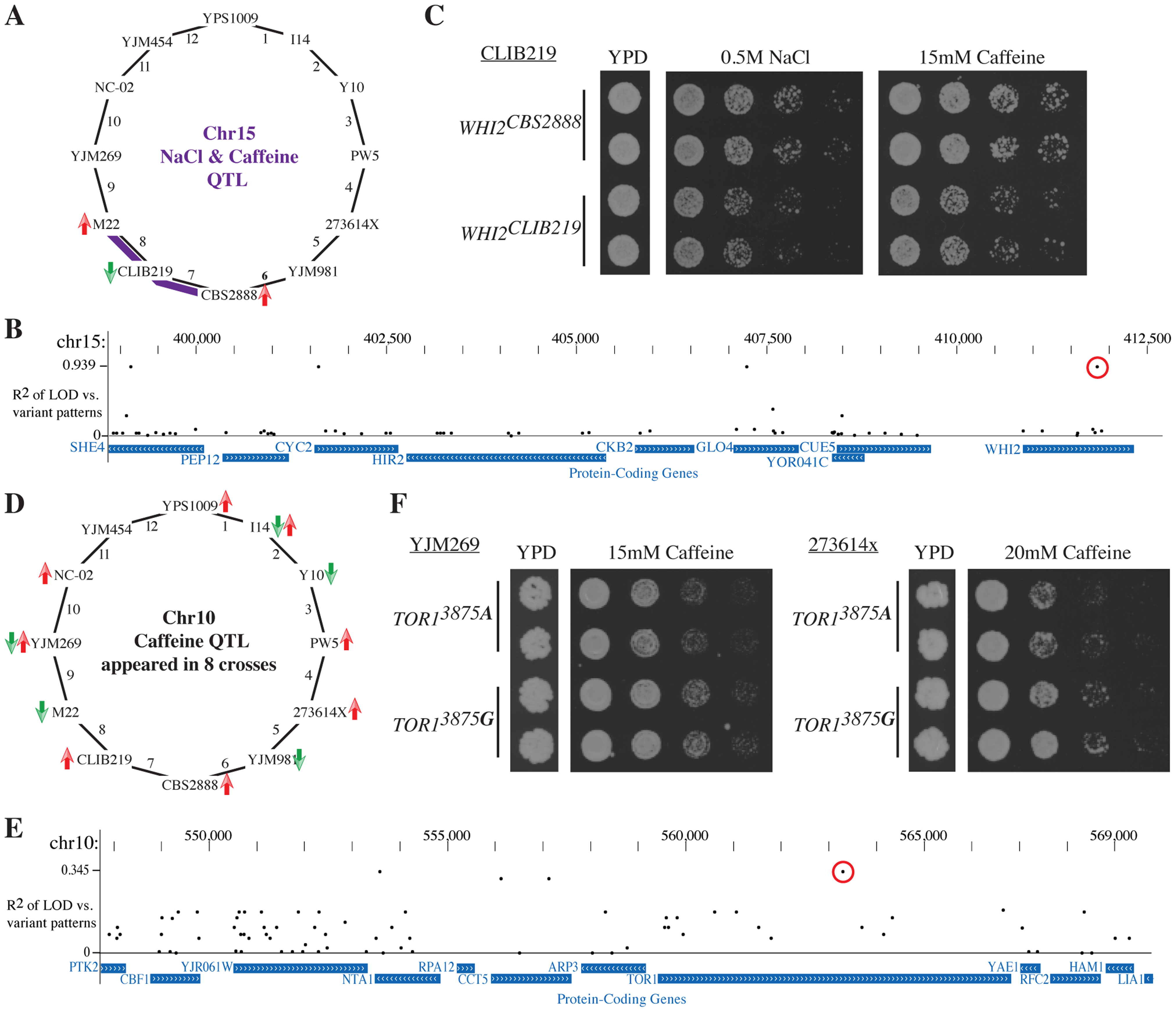 Leveraging the Round Robin design to identify causative variants.