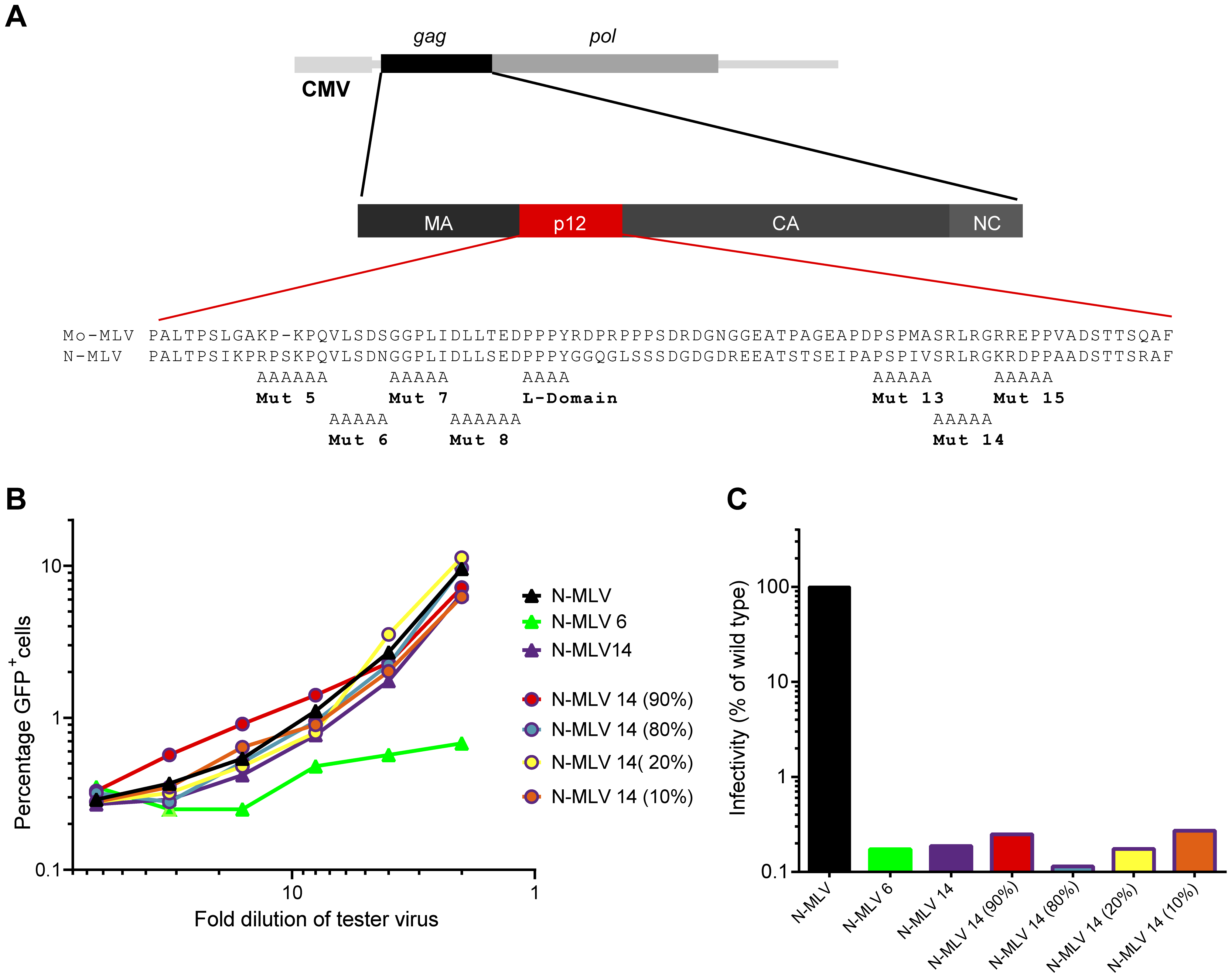 Abrogation of TRIM5alpha restriction by mixed p12 mutant particles.