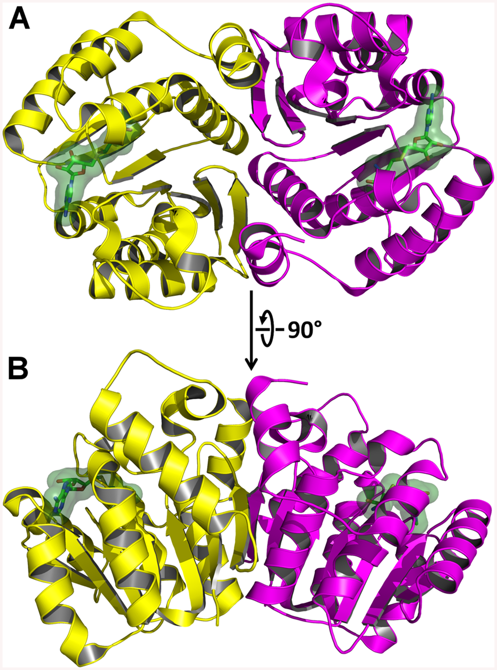 X-Ray Crystal Structure of AnphA.01233.a Bound to SAH.