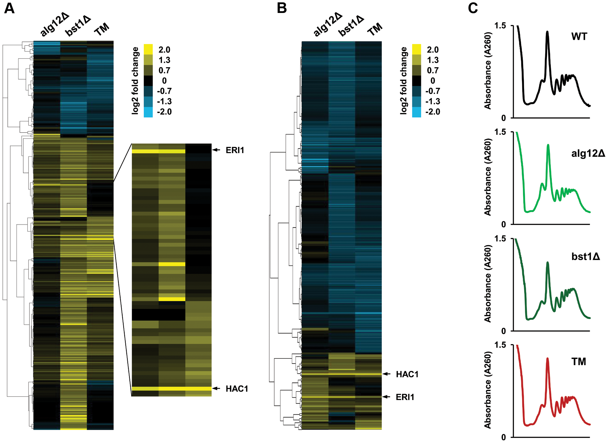 Translational control in the long-lived ER secretory pathway mutants.