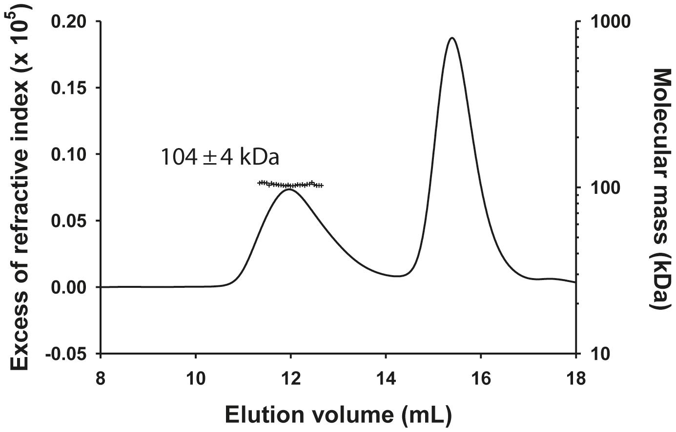 Heterotrimeric VSV N<sub>Δ21</sub><sup>0</sup>-P dimer complex in solution.