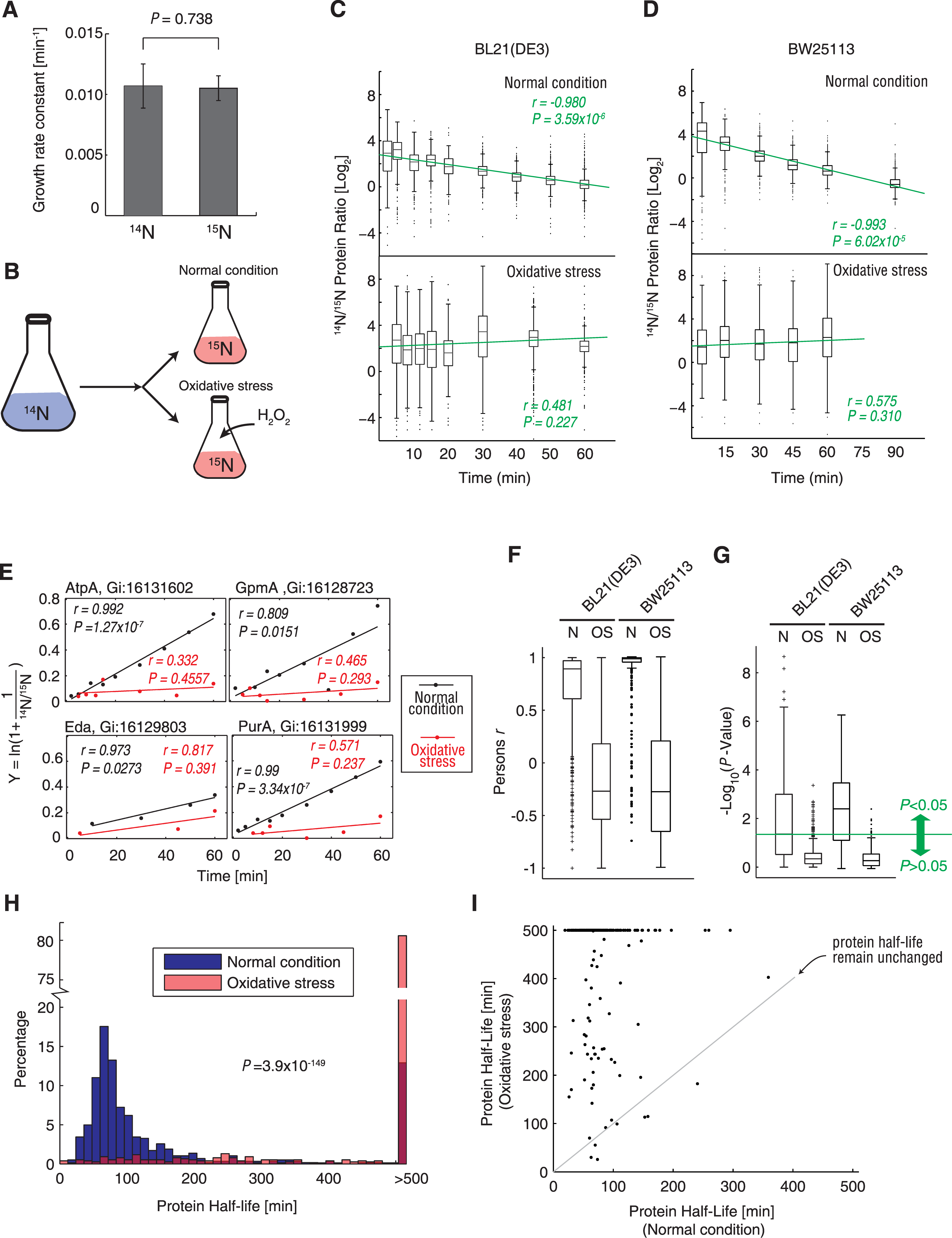 Protein synthesis measurement under normal condition and oxidative stress using <sup>15</sup>N metabolic labeling and mass spectrometry.