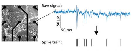 Fig. 2: Nine electrodes are displayed (electrode diameter 30 μm) including neuronal network. Right: Raw neuronal signal recorded from one electrode featuring spikes whose occurring times (spike train) are used for analysis.