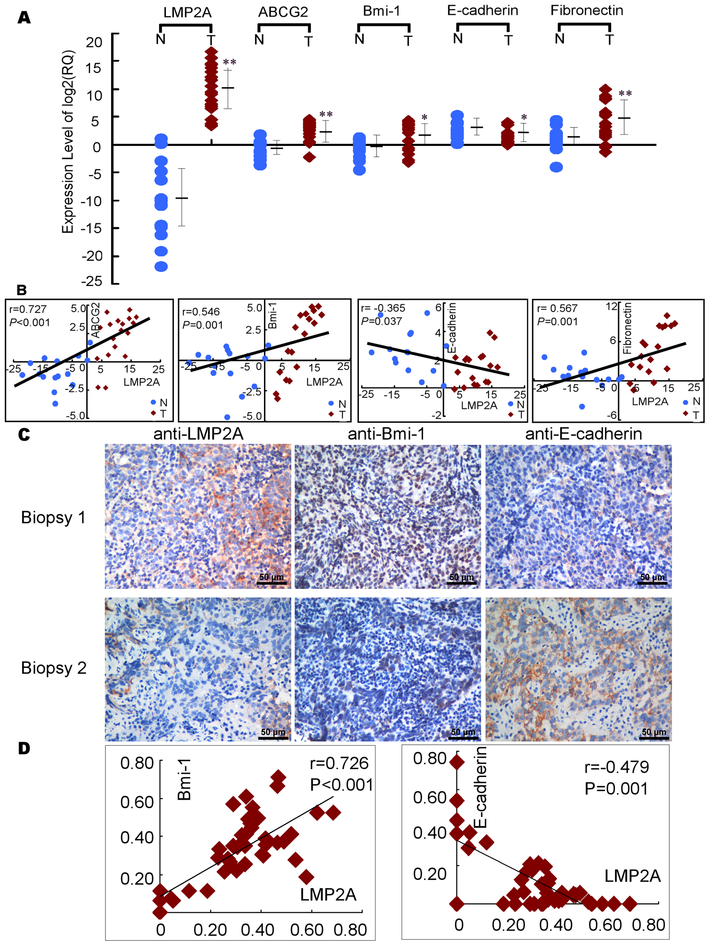 The expression of LMP2A correlates with the expression of EMT and stem cell-related markers in NPC.