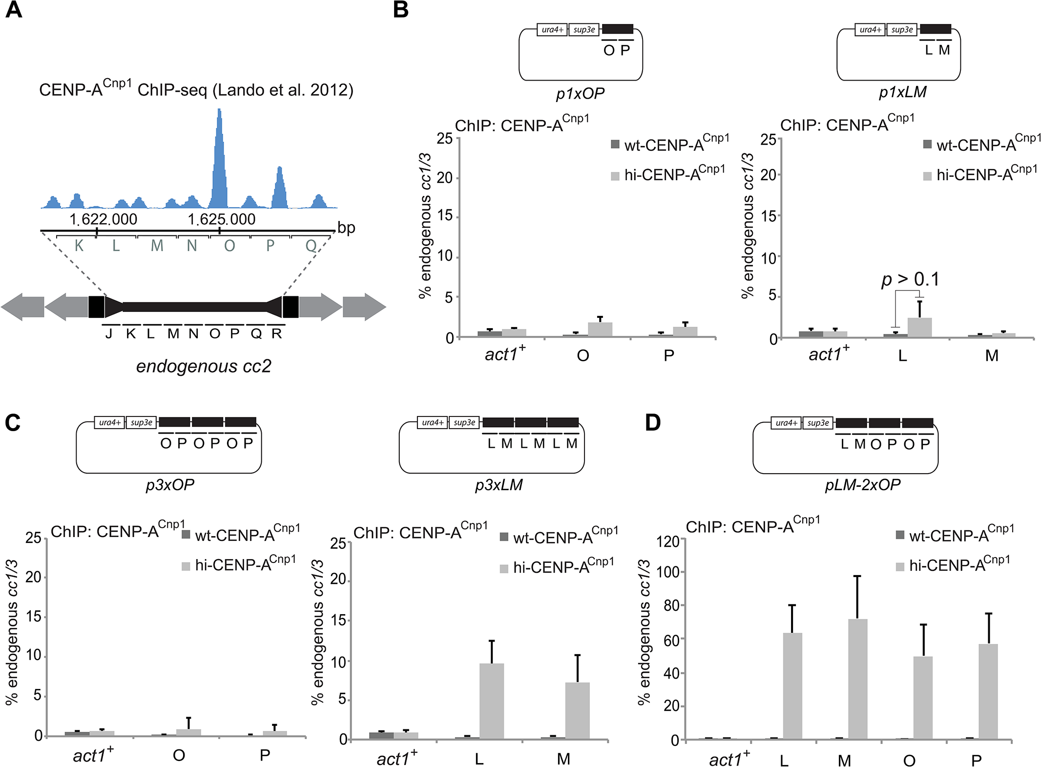 A 2 kb region of cc2 is sufficient to establish CENP-A<sup>Cnp1</sup> chromatin.