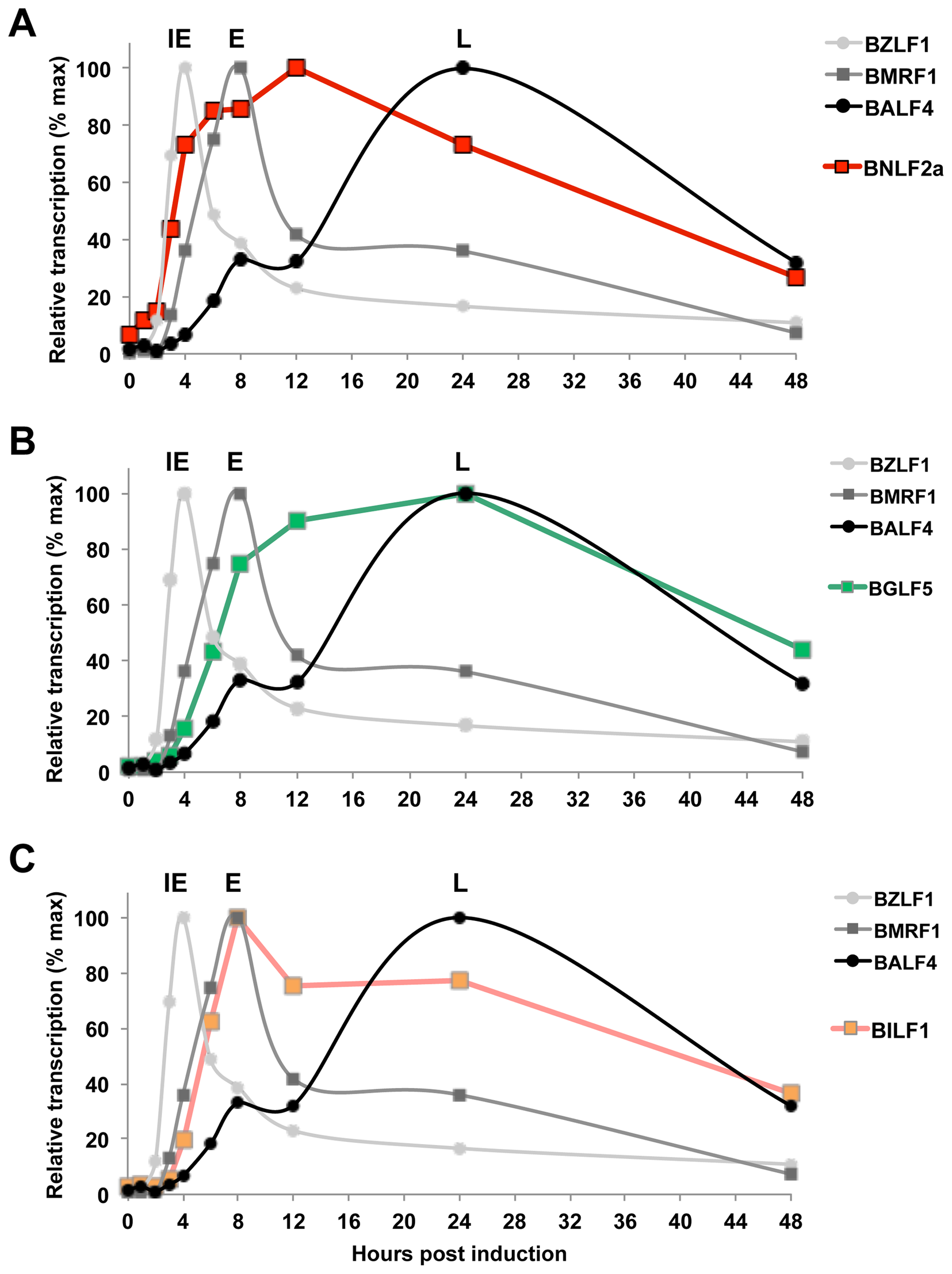 Expression kinetics of EBV lytic cycle.