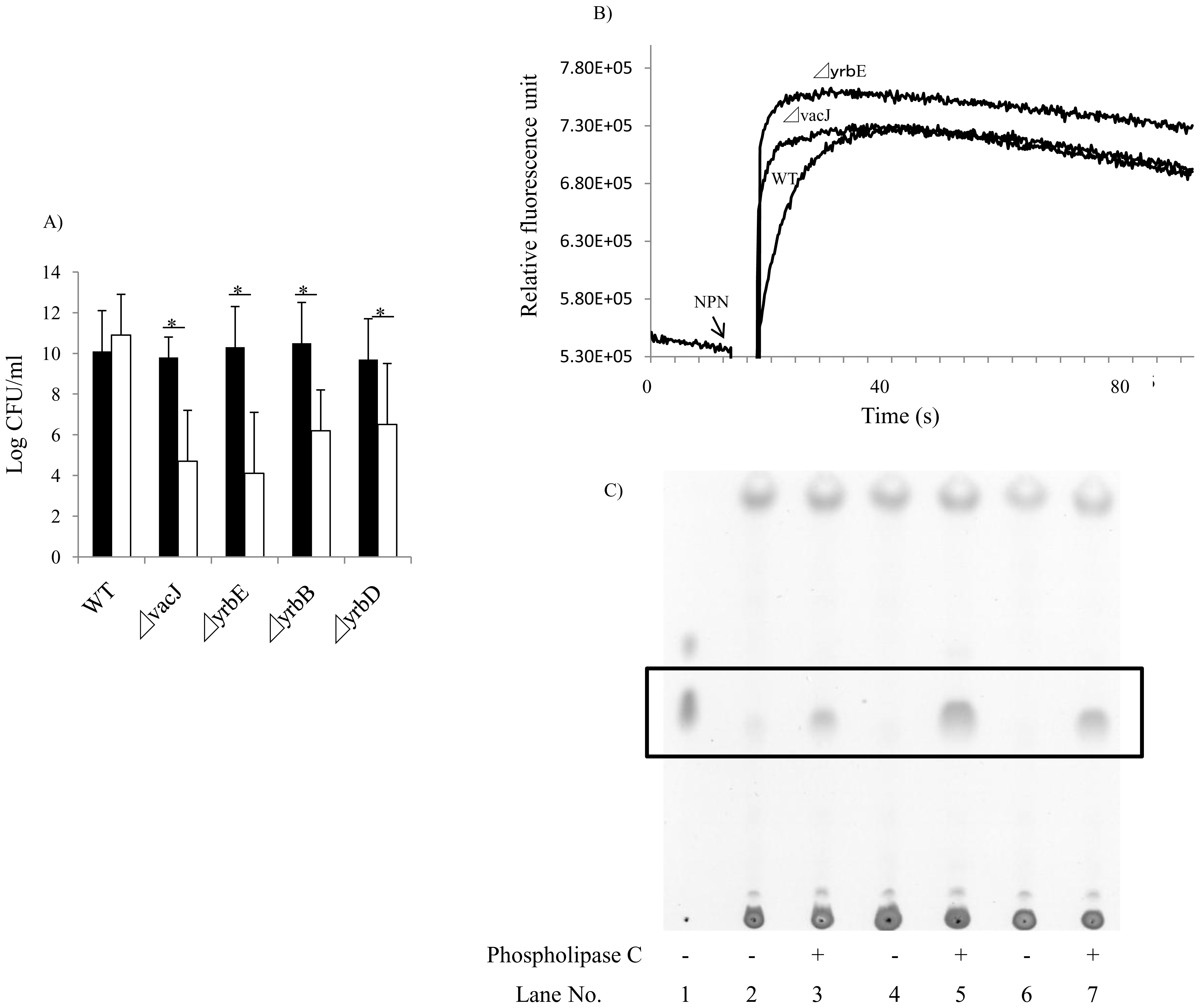 Effect of mutations in <i>vacJ</i> and genes of the <i>yrb</i> ABC transporter on outer membrane characteristics.