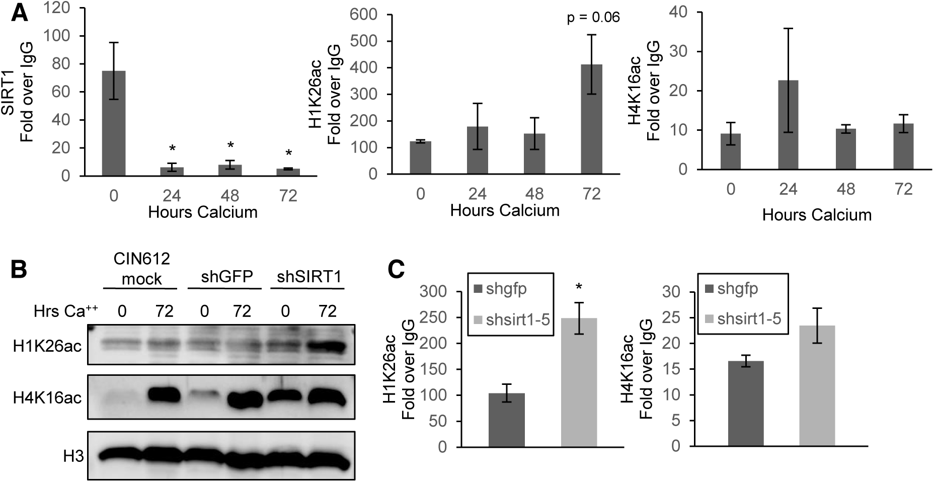 SIRT1 binds the HPV31 URR and controls histone acetylation.