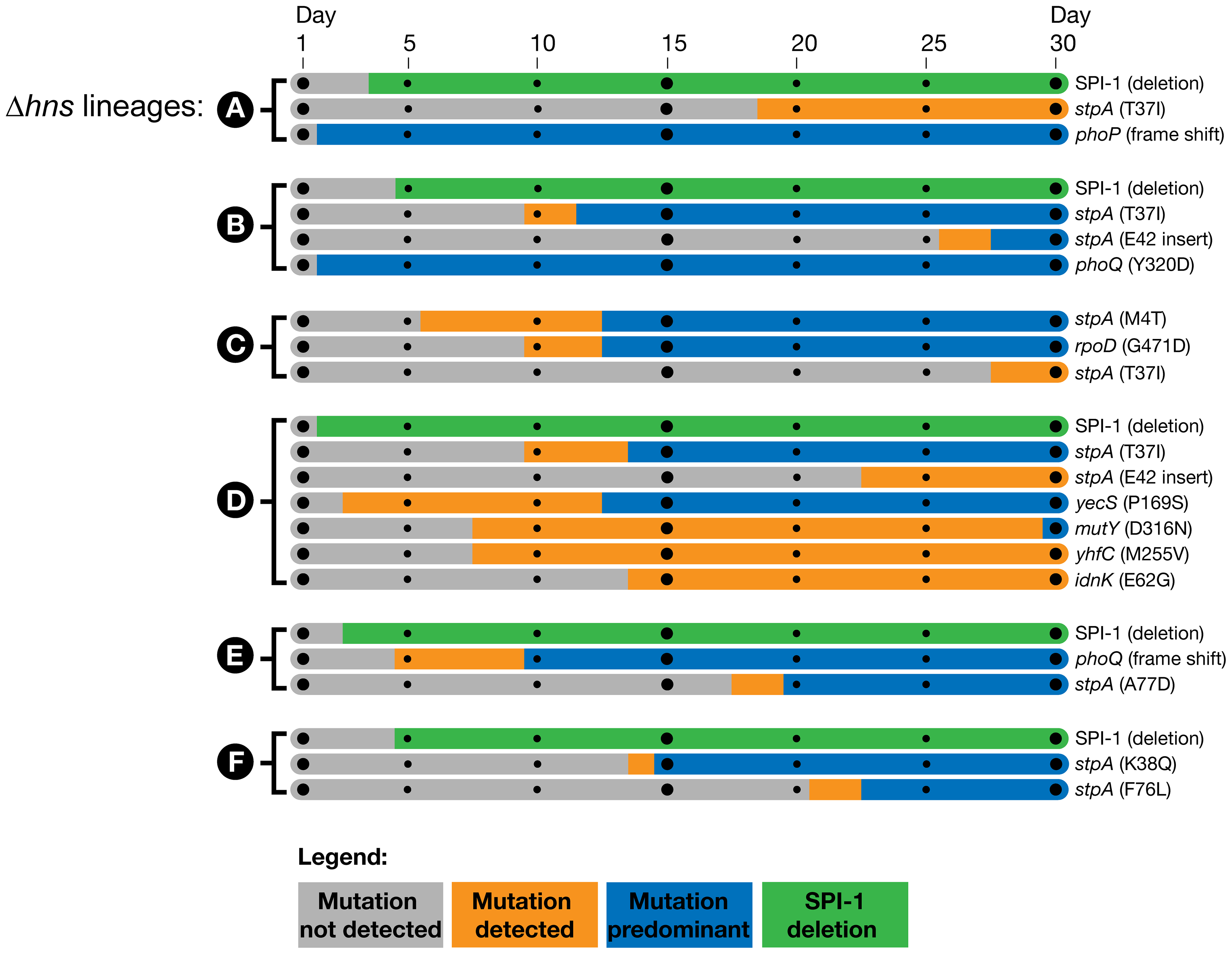 Timeline of the genetic changes in the <i>hns</i> mutant lineages.