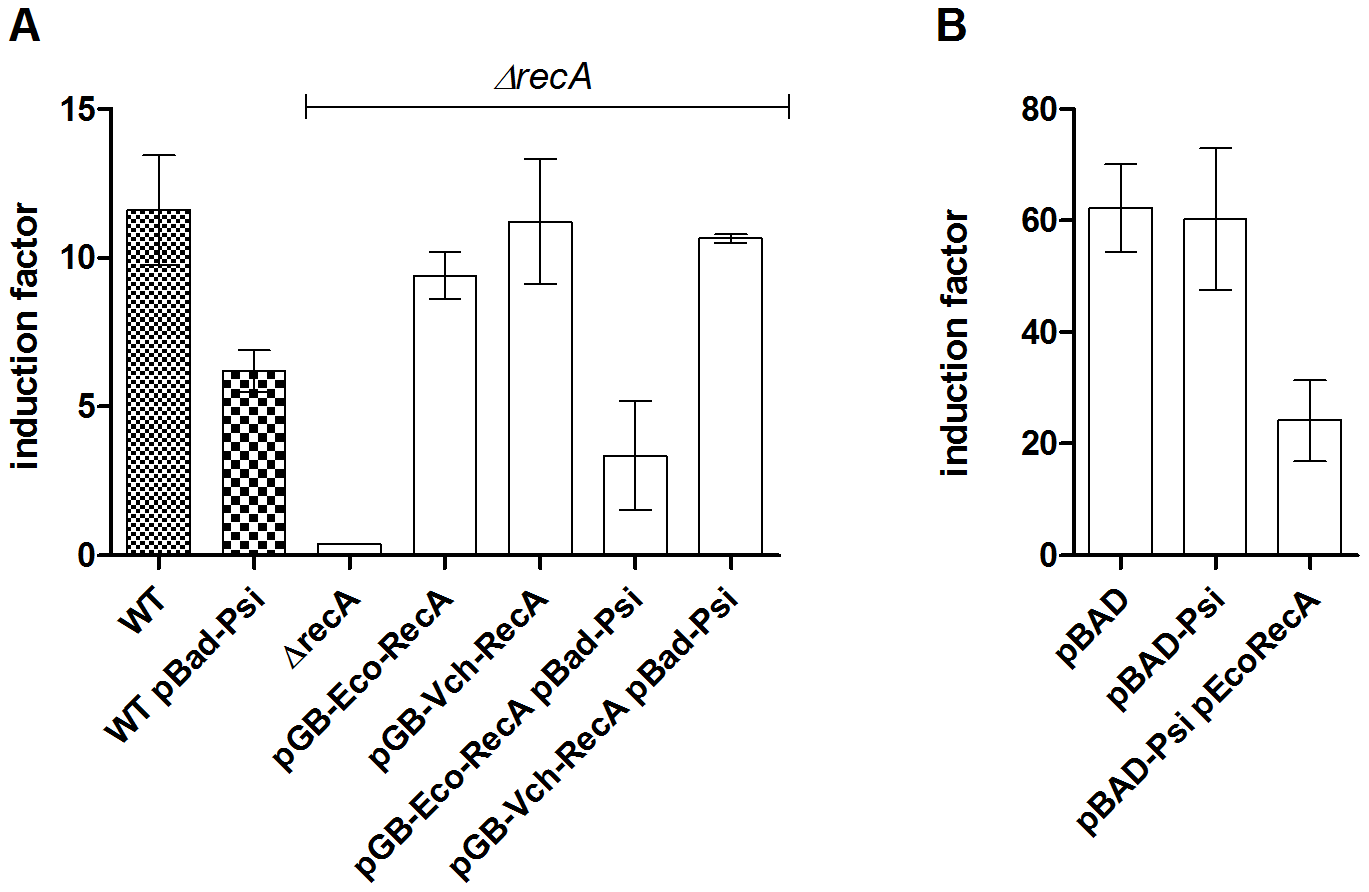 PsiB alleviates SOS induction in <i>E. coli</i> but not in <i>V. cholerae</i> because of impaired interaction with RecA<i><sub>Vch</sub></i>.