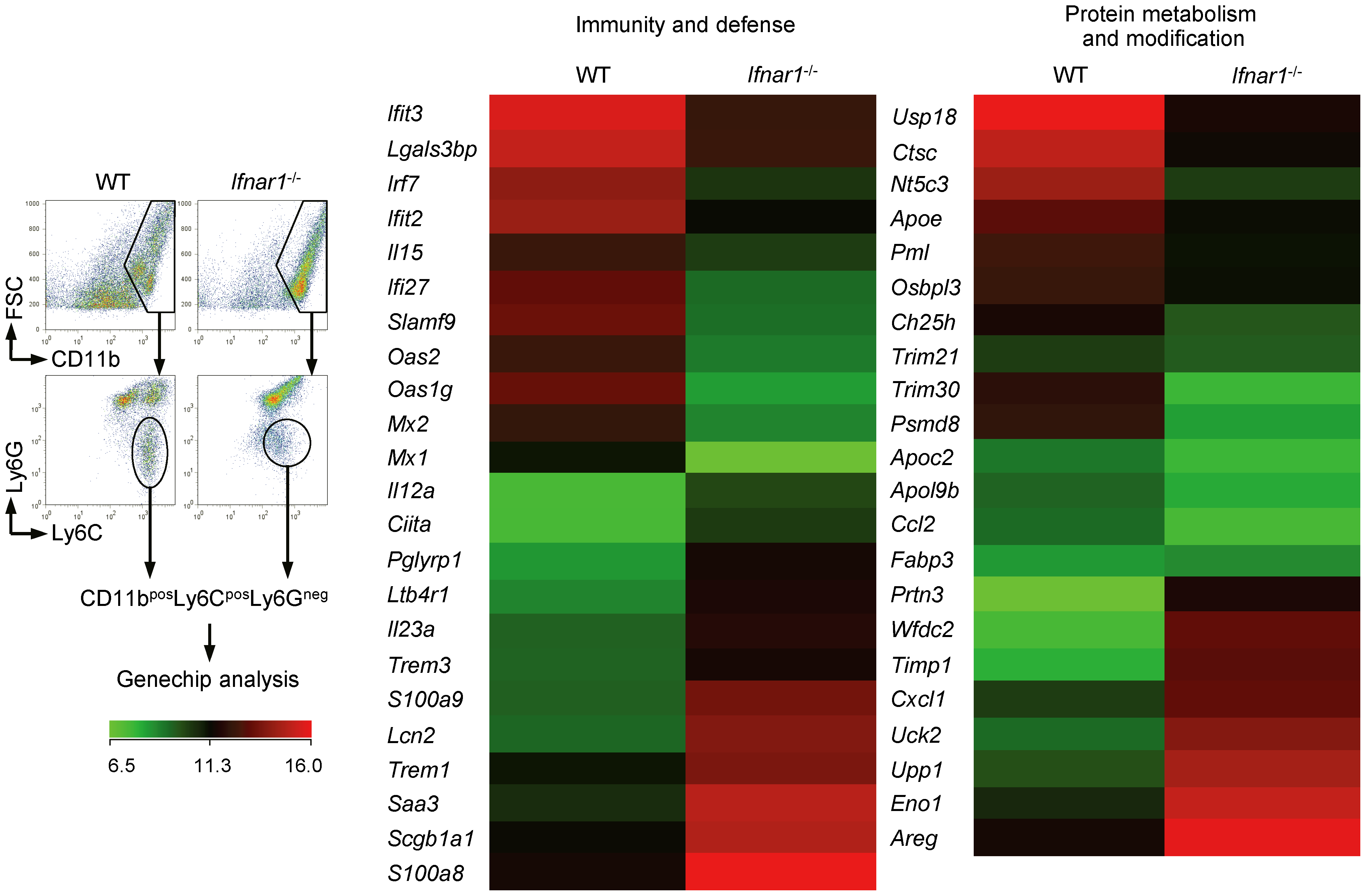 Monocytes of <i>Ifnar1</i><sup>−/−</sup> mice express different patterns of genes.