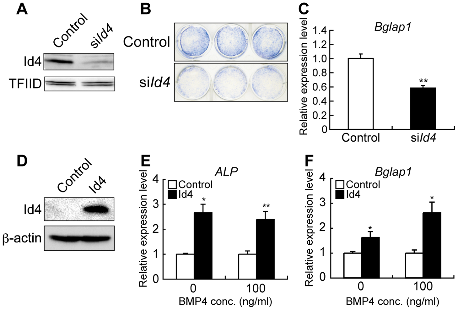 <i>Id4</i> promotes osteoblast differentiation in ST2 cells.