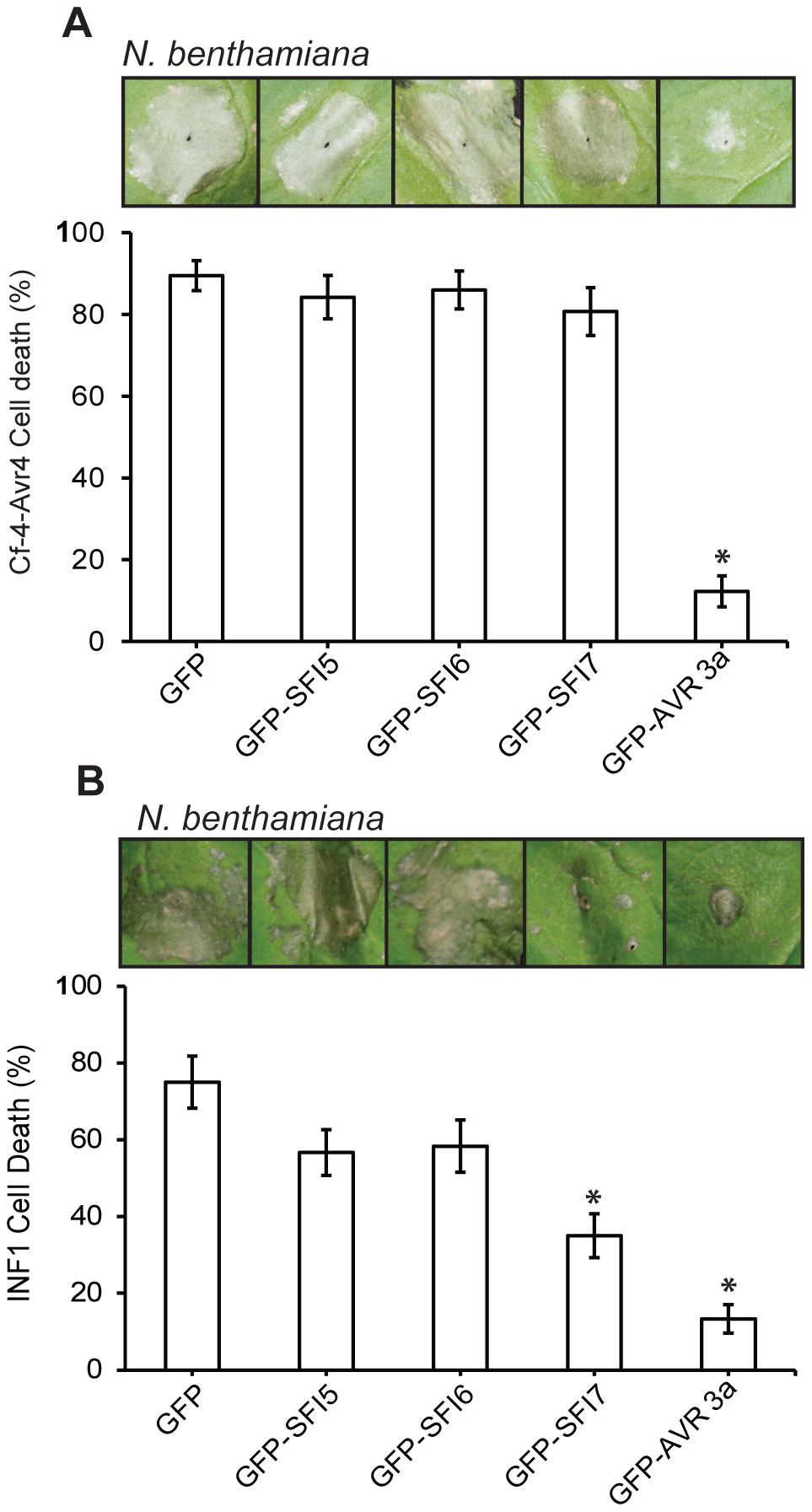 Effect of GFP-SFI5, GFP-SFI6 and GFP-SFI7 on PCD triggered by INF1 or by co-expression of Cf-4 with <i>Cladosporium fulvum</i> Avr4.