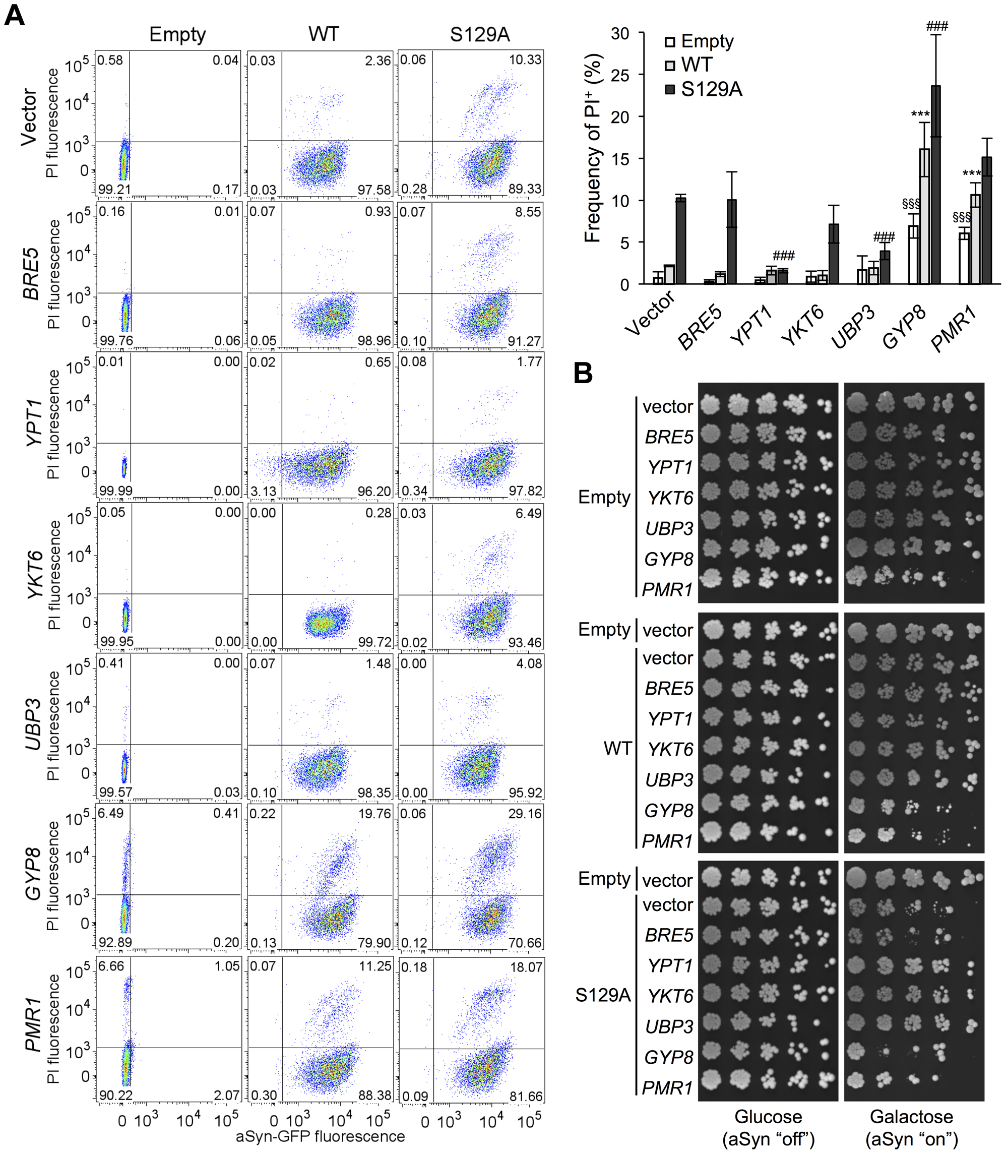 ER-to-Golgi trafficking genes are modifiers of S129A aSyn toxicity.
