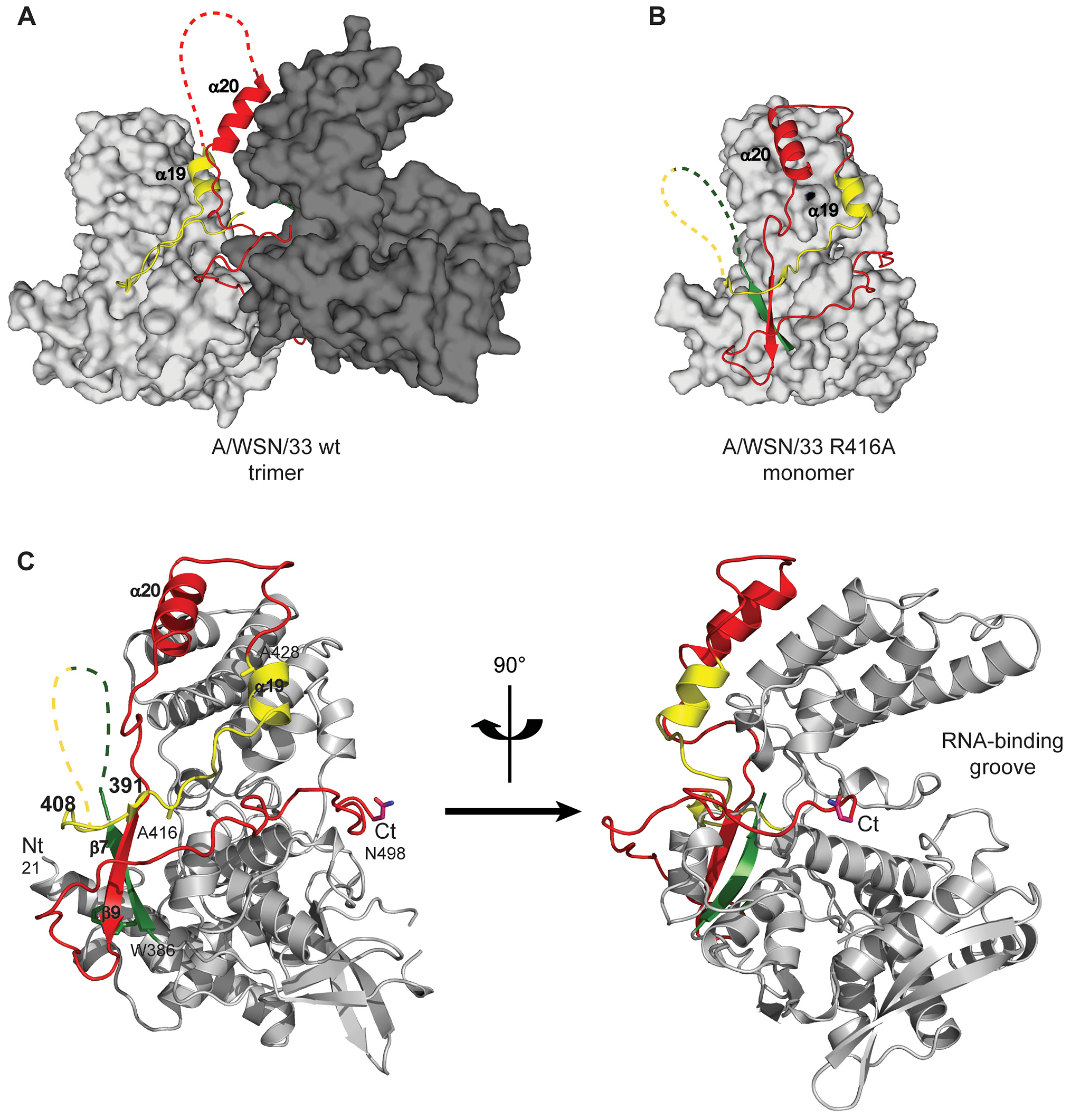 Structure of monomeric NP and comparison with the trimer structure.