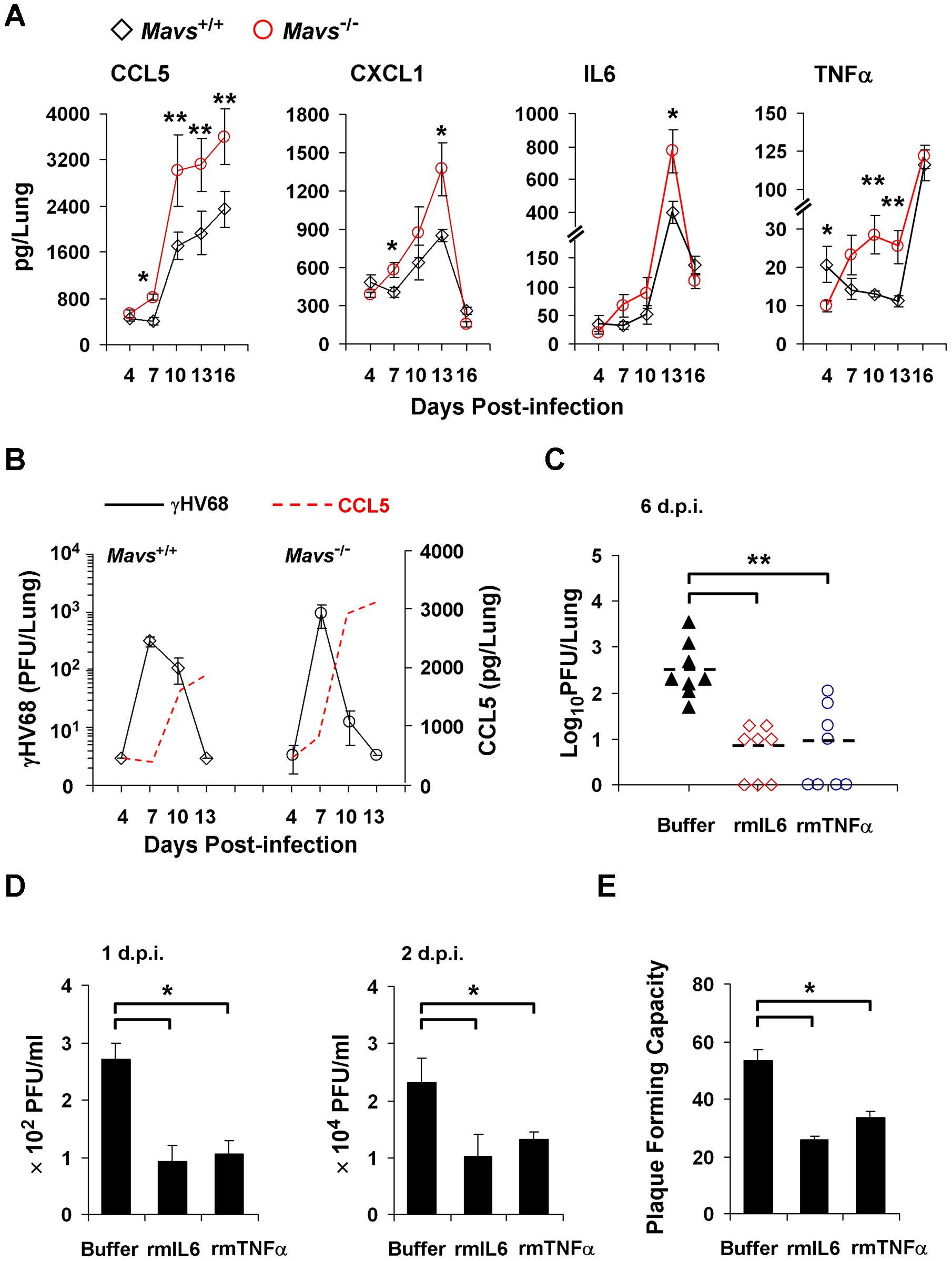MAVS deficiency increases inflammatory cytokines in the lung of γHV68-infected mice.