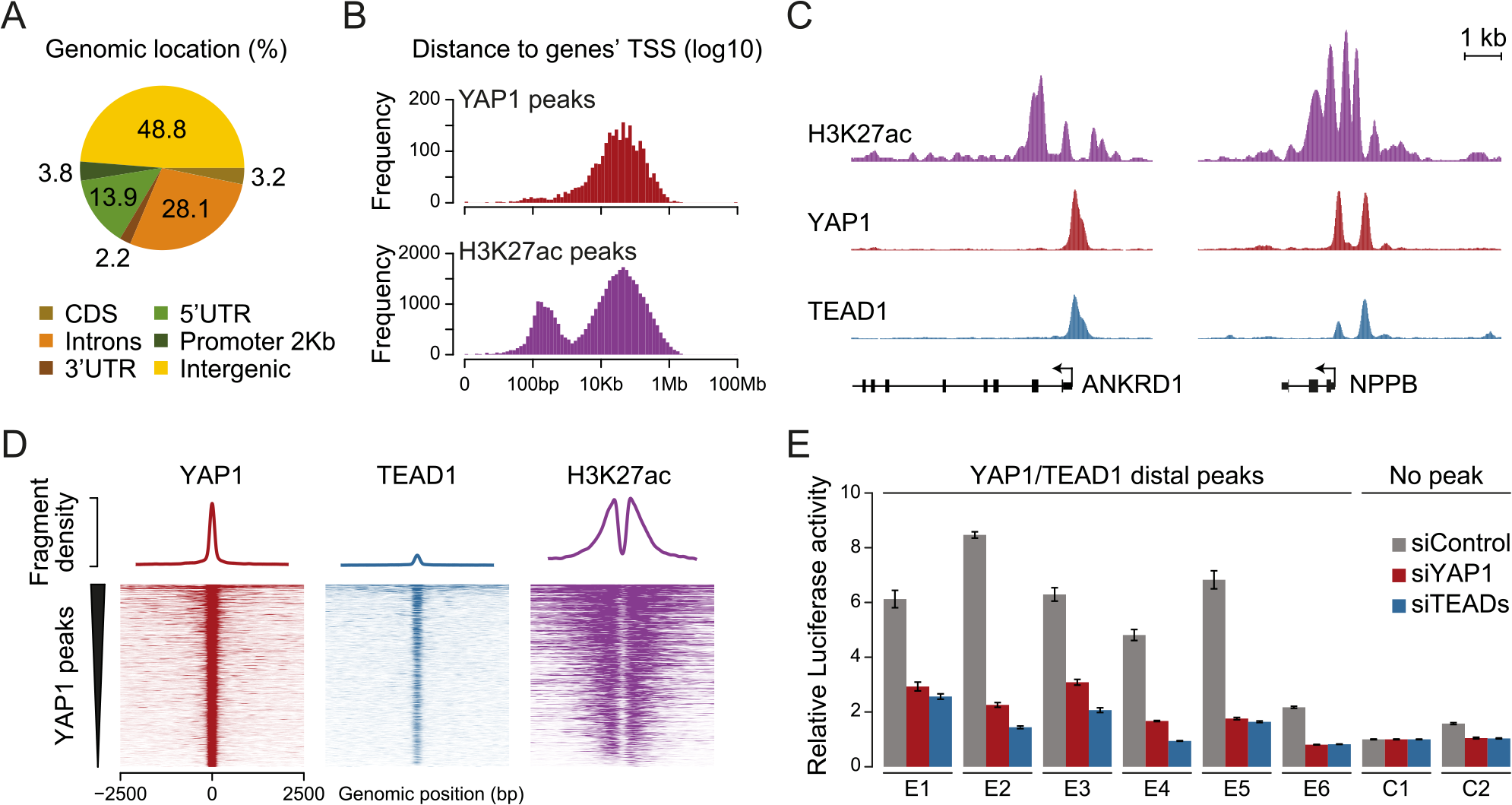 YAP1/TEAD1 associate with active enhancers.