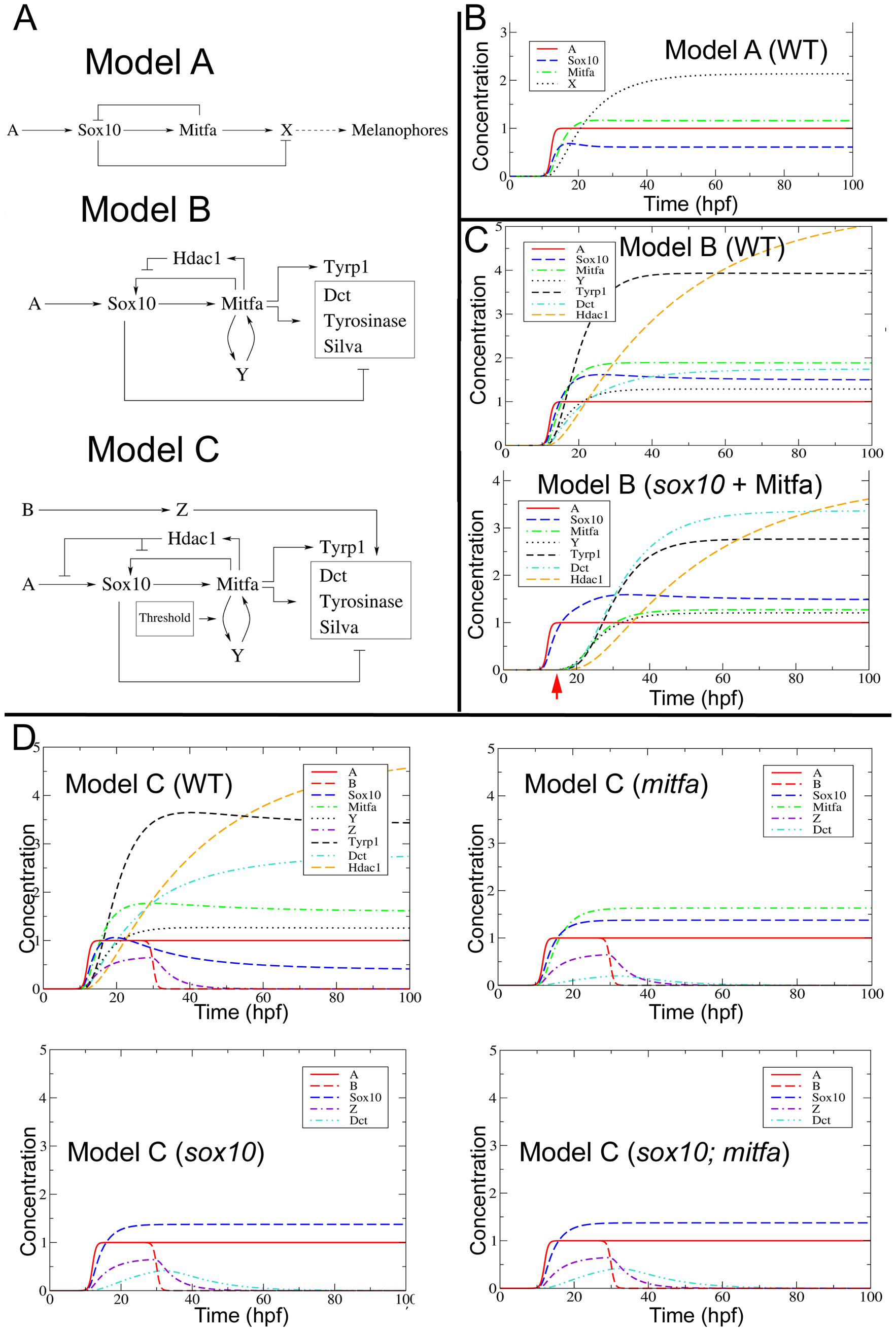 Mathematical modelling and development of the melanocyte GRN.
