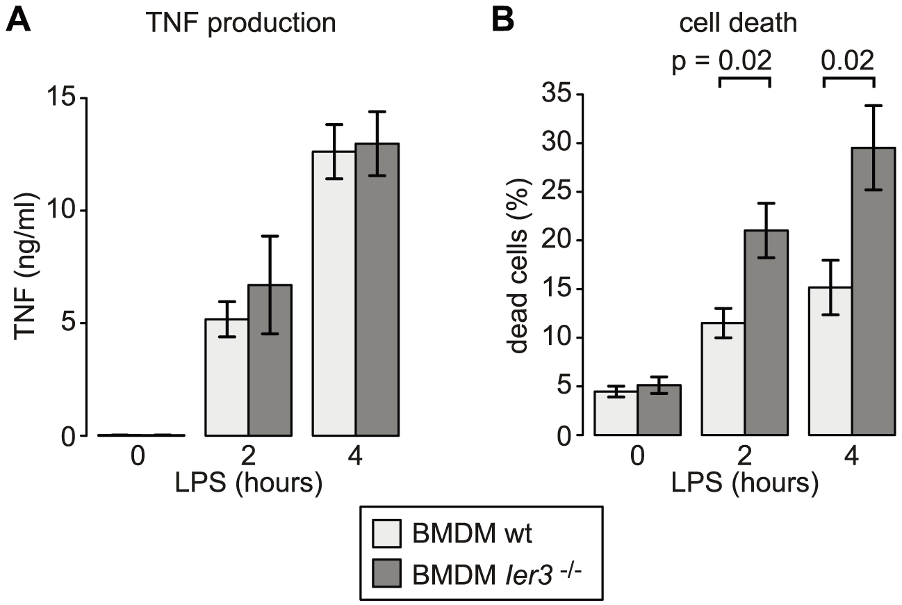 Effect of <i>Ier3</i> knockout on TNF production and survival of LPS-stimulated BMDM.
