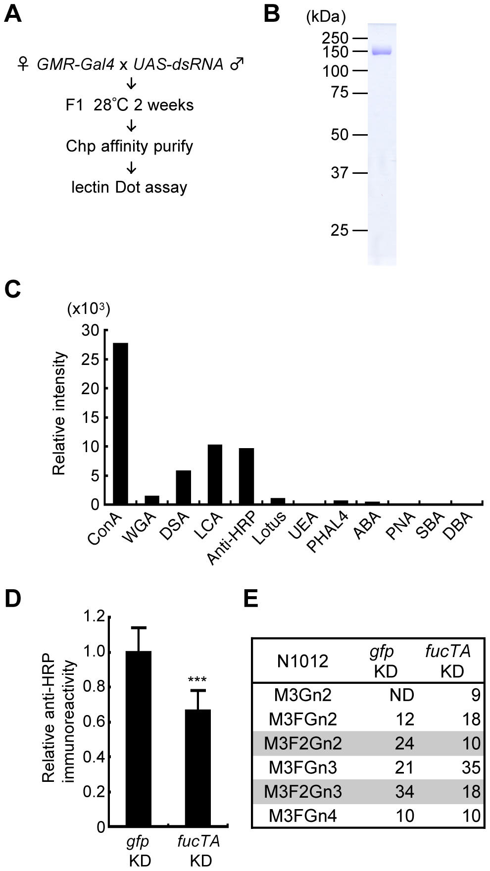 Screening strategy and validation of the primary screen for genes whose knockdown impairs glycosylation.