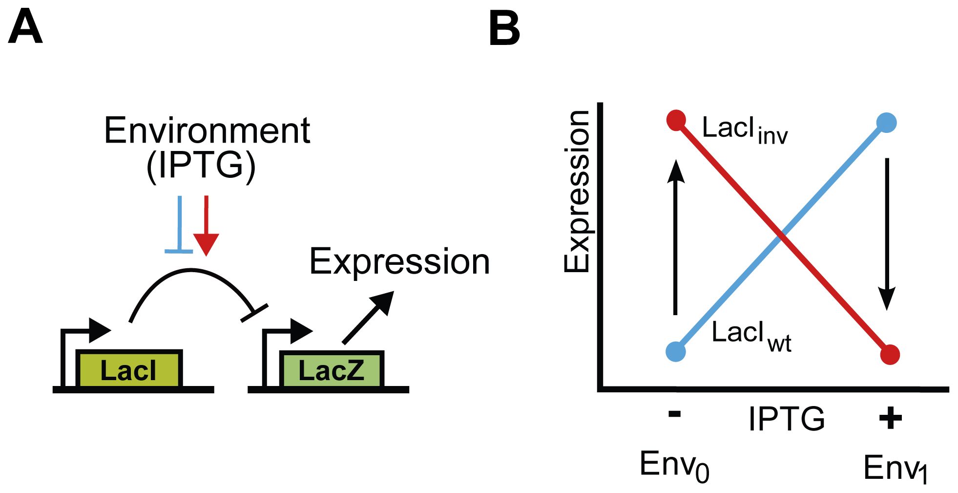 Functional description and schematic representation of genetic variants in the <i>lac</i> system.