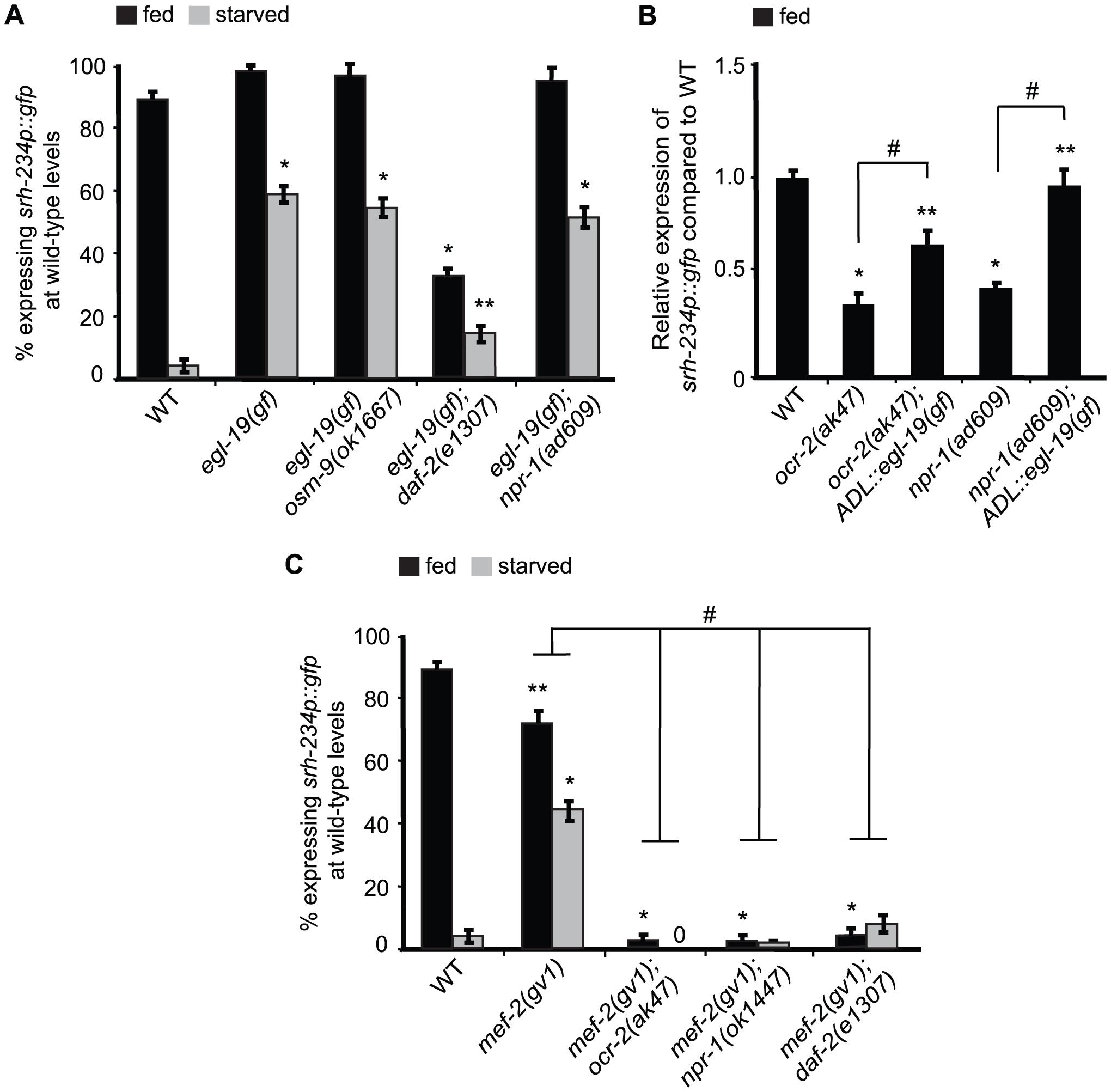 <i>mef-2</i> mutations and increased calcium signaling suppress the starvation-induced downregulation of <i>srh-234</i> expression.