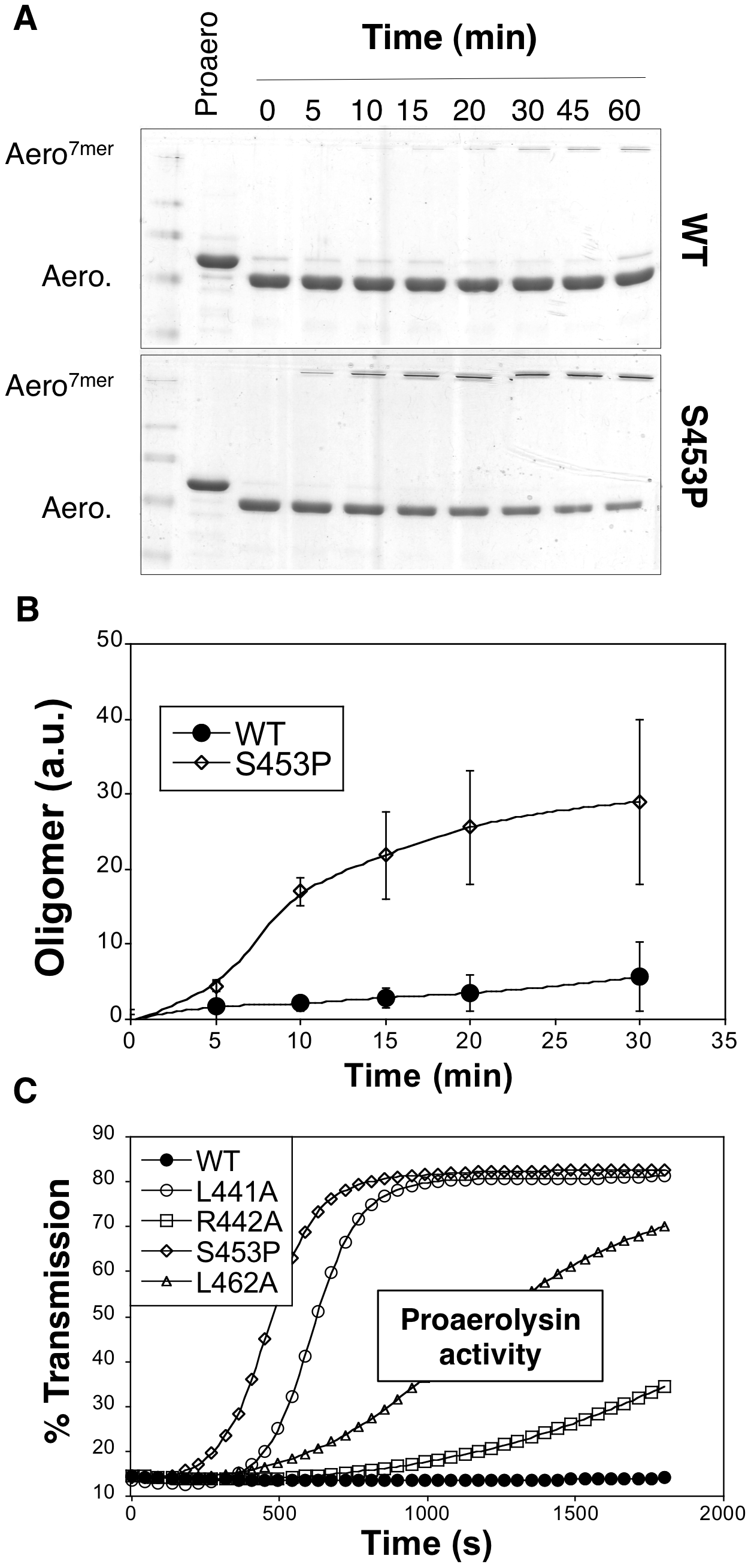 Effect of the S453P mutation on oligomerization and activity.